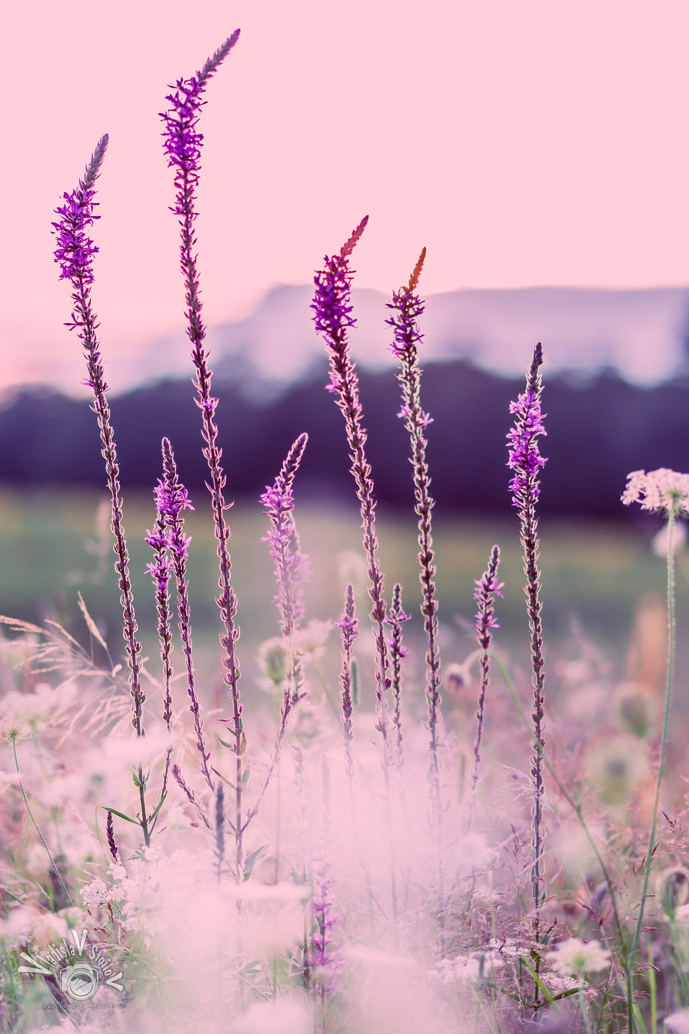 Purple sunset  by Vladislav Stoilov