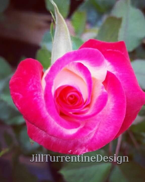 Spring by Jill Turrentine