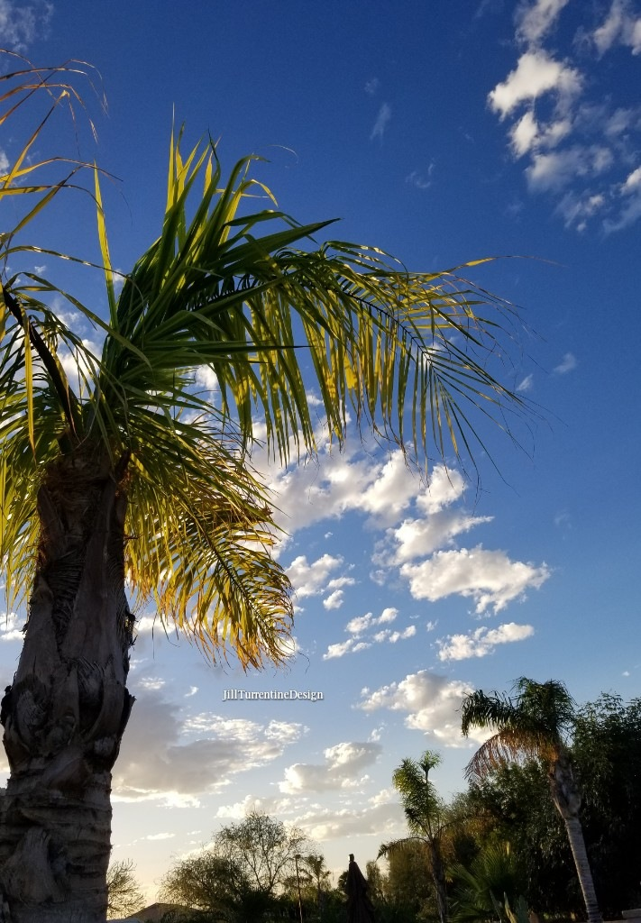 Morning Palm by Jill Turrentine