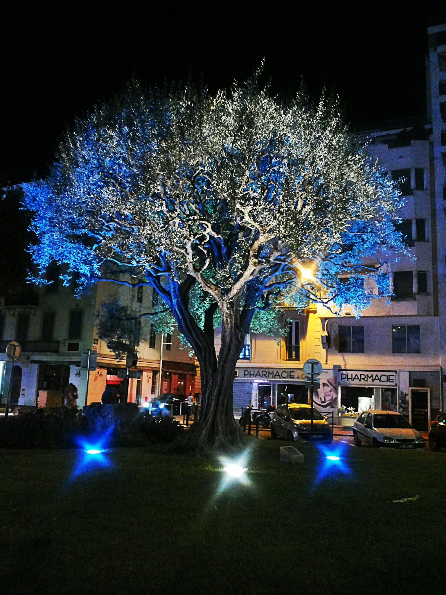 Tree by Kata S.