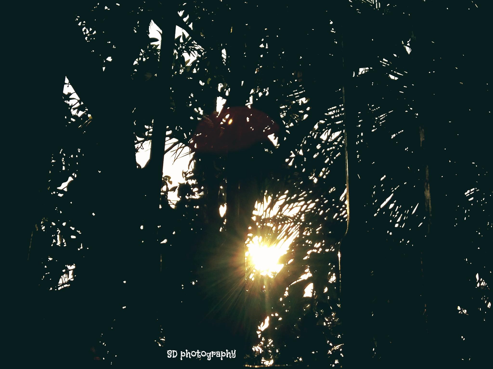 #sunlight by Sid Dutta
