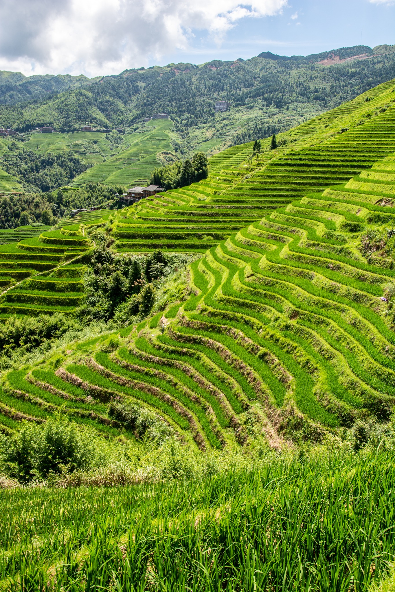 Longji rice terraces by Benjamin G.