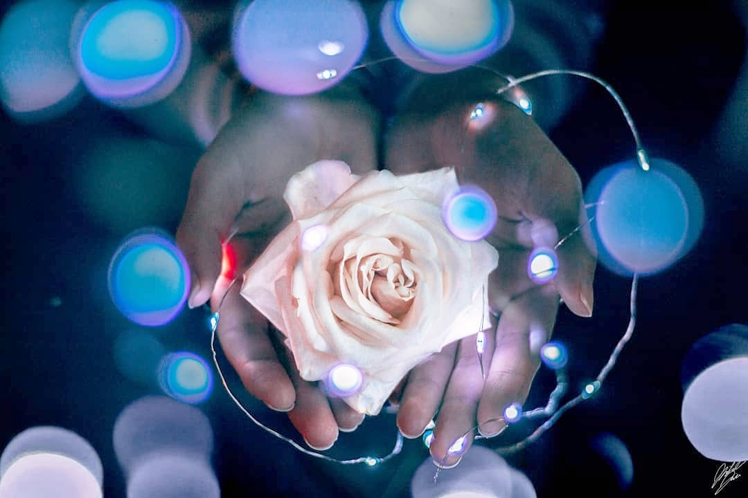 Do not watch the petals fall from the rose with sadness, know that, like life, things sometimes must by Michael Kim