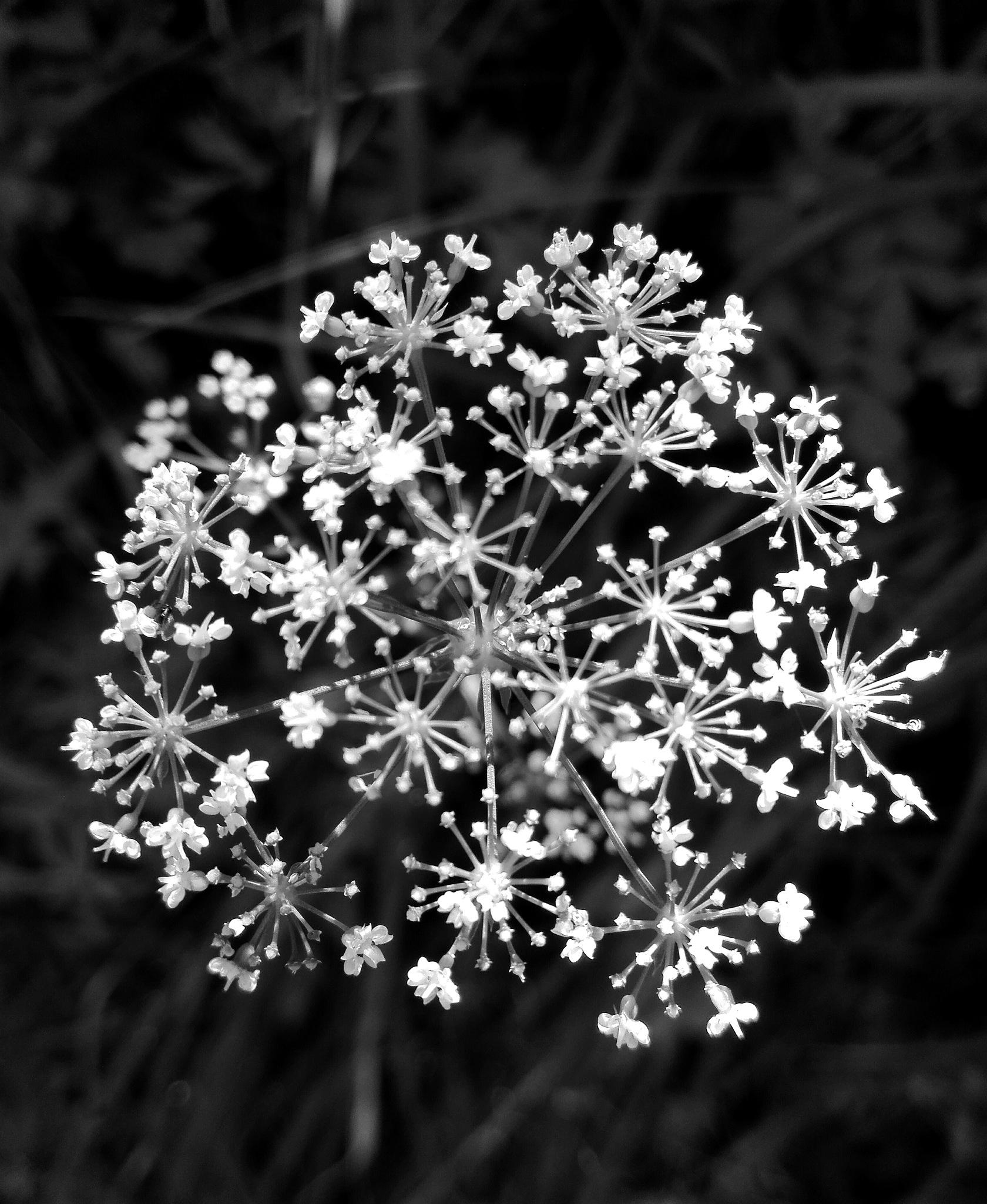 fire works or flower by  Gaelle Le Meur
