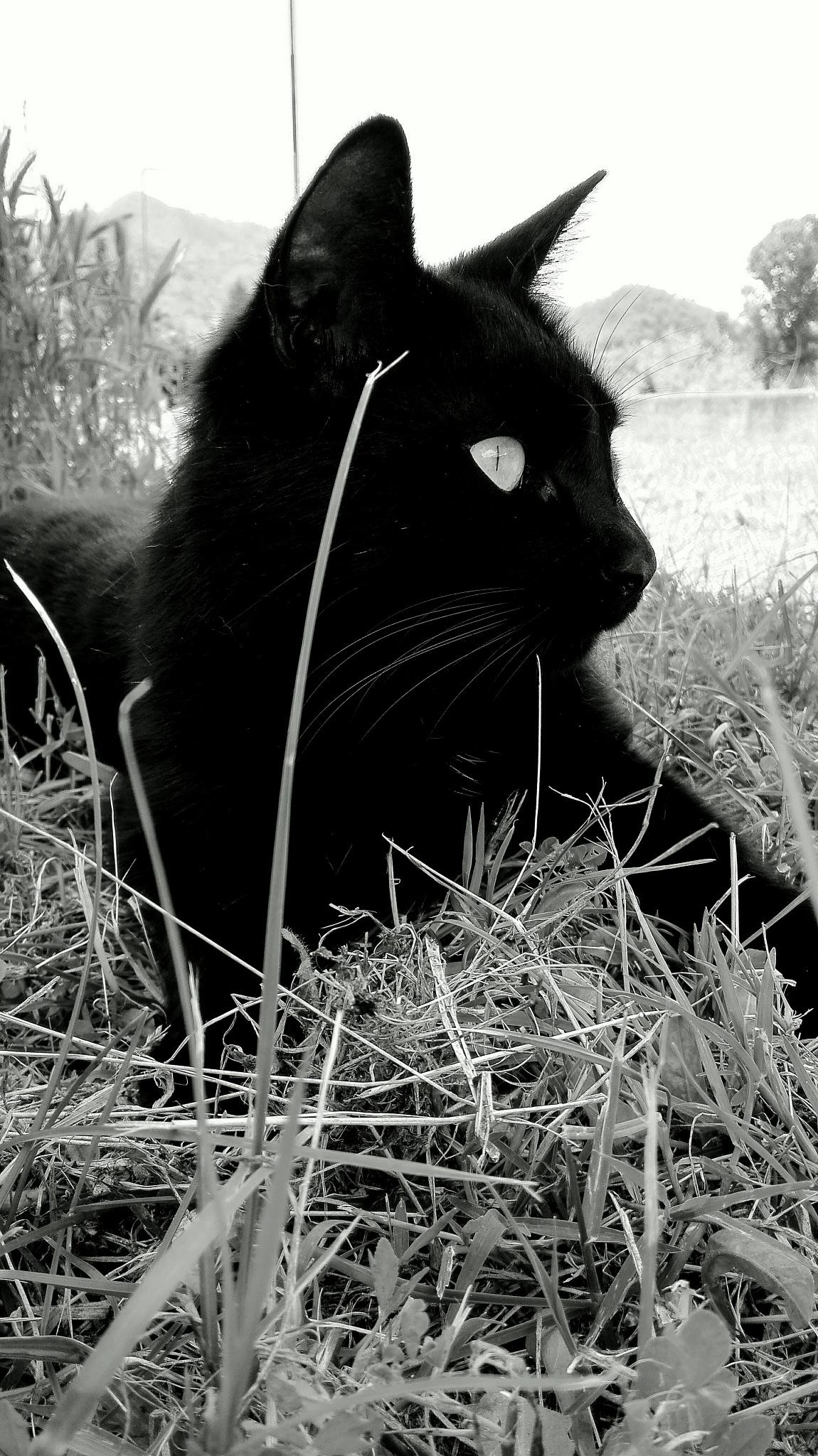 Tommy total black by  Gaelle Le Meur