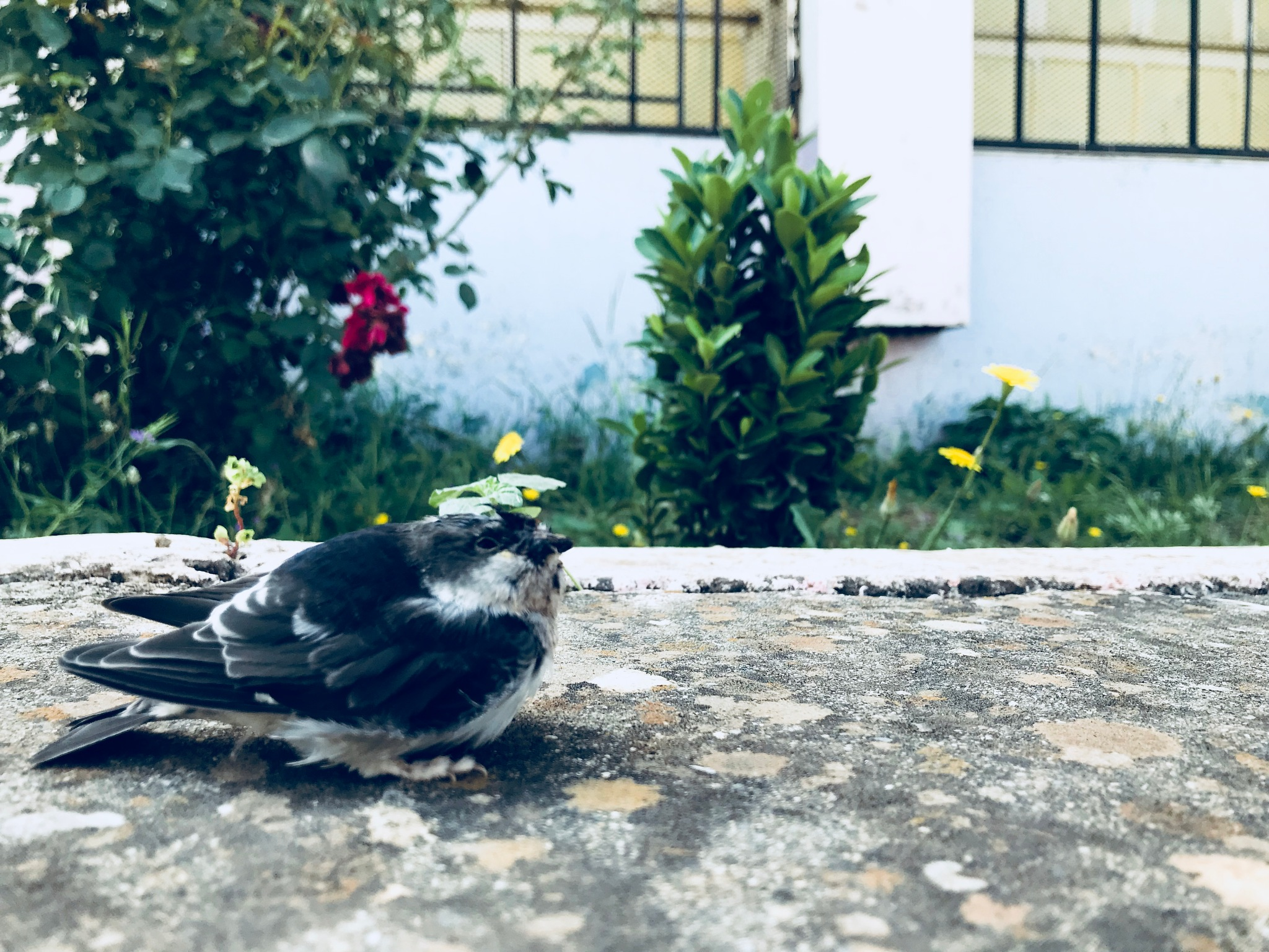 Swallow by yacinebgc