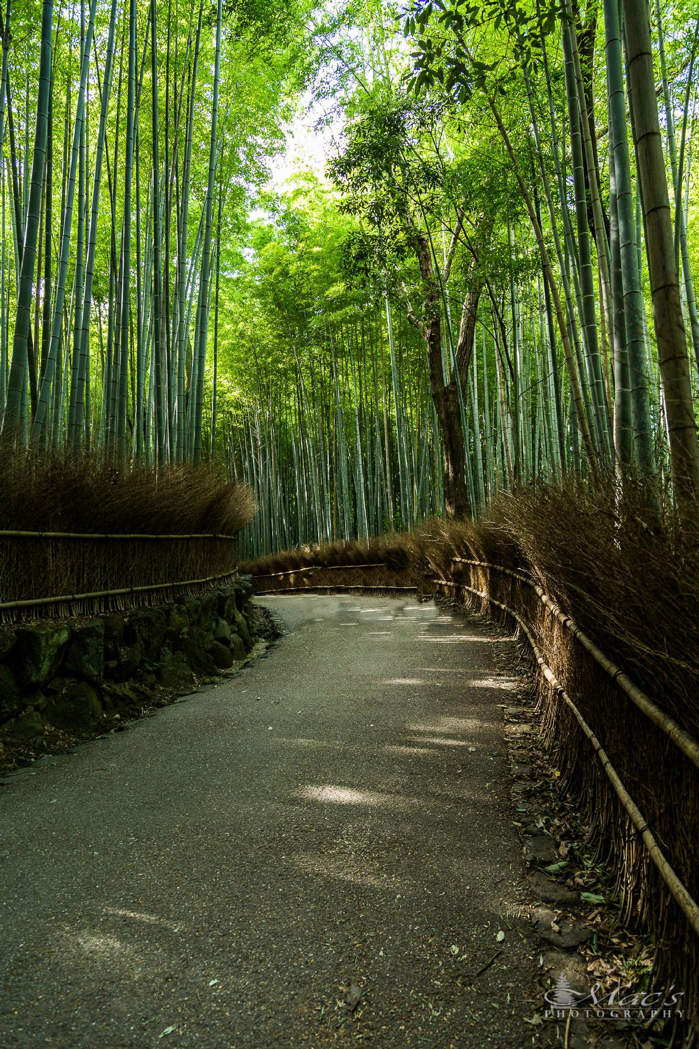 Bamboo grove by Mac's Photography