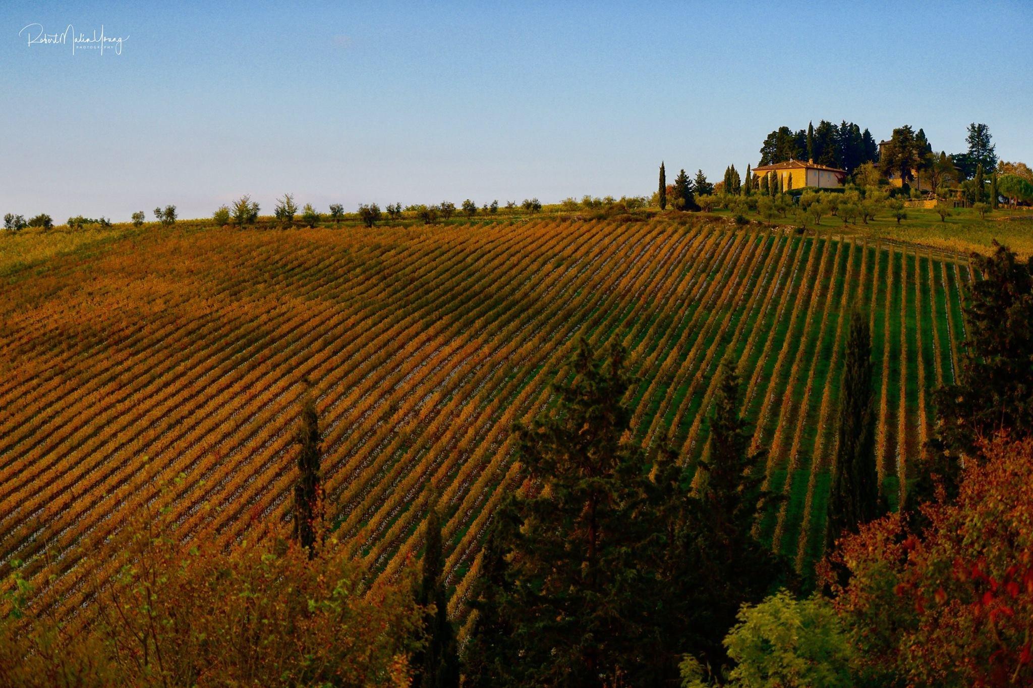 Bella Toscana 2018 by Robert Malin Young