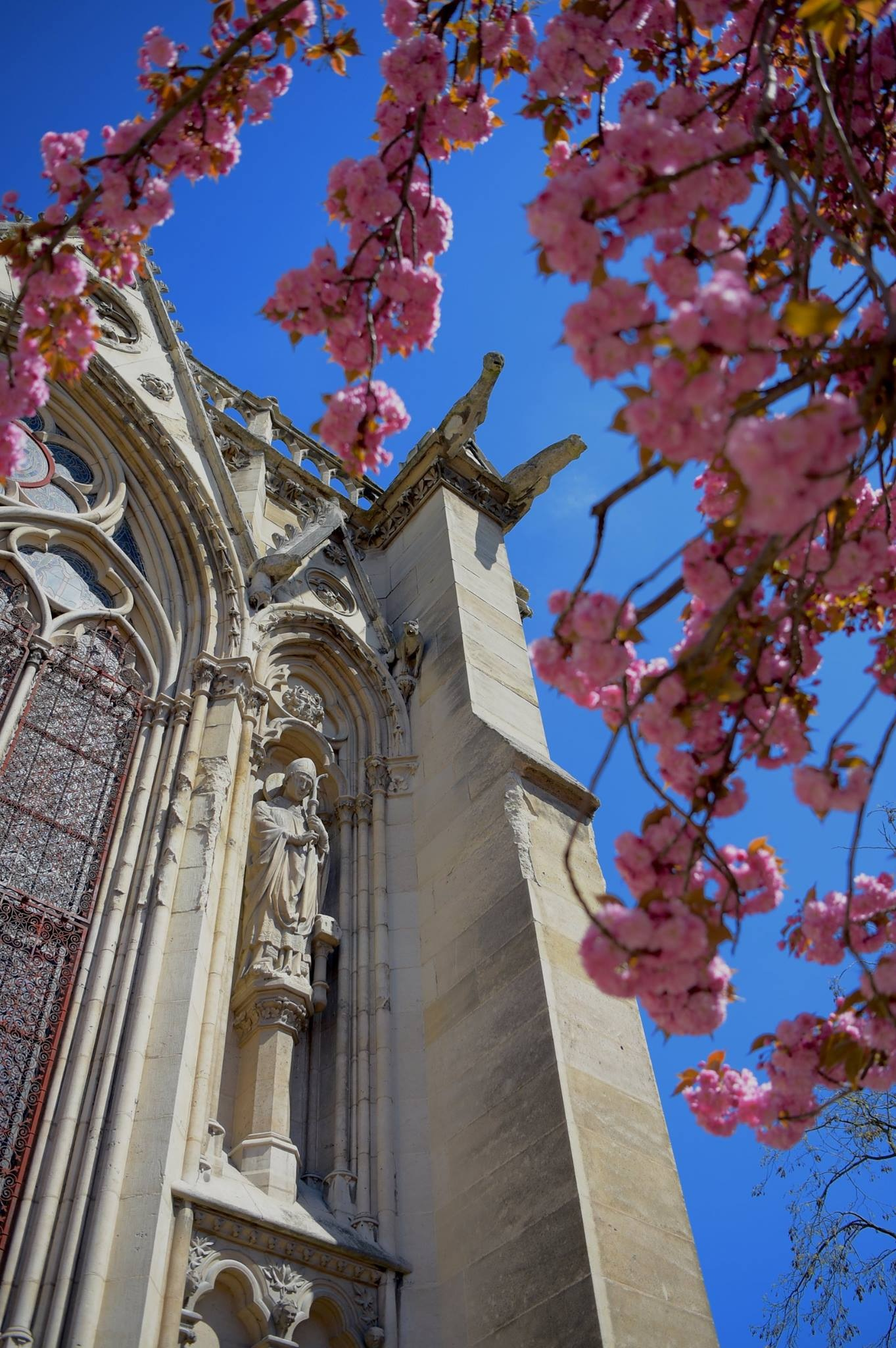 April in Paris 2018 by Robert Malin Young