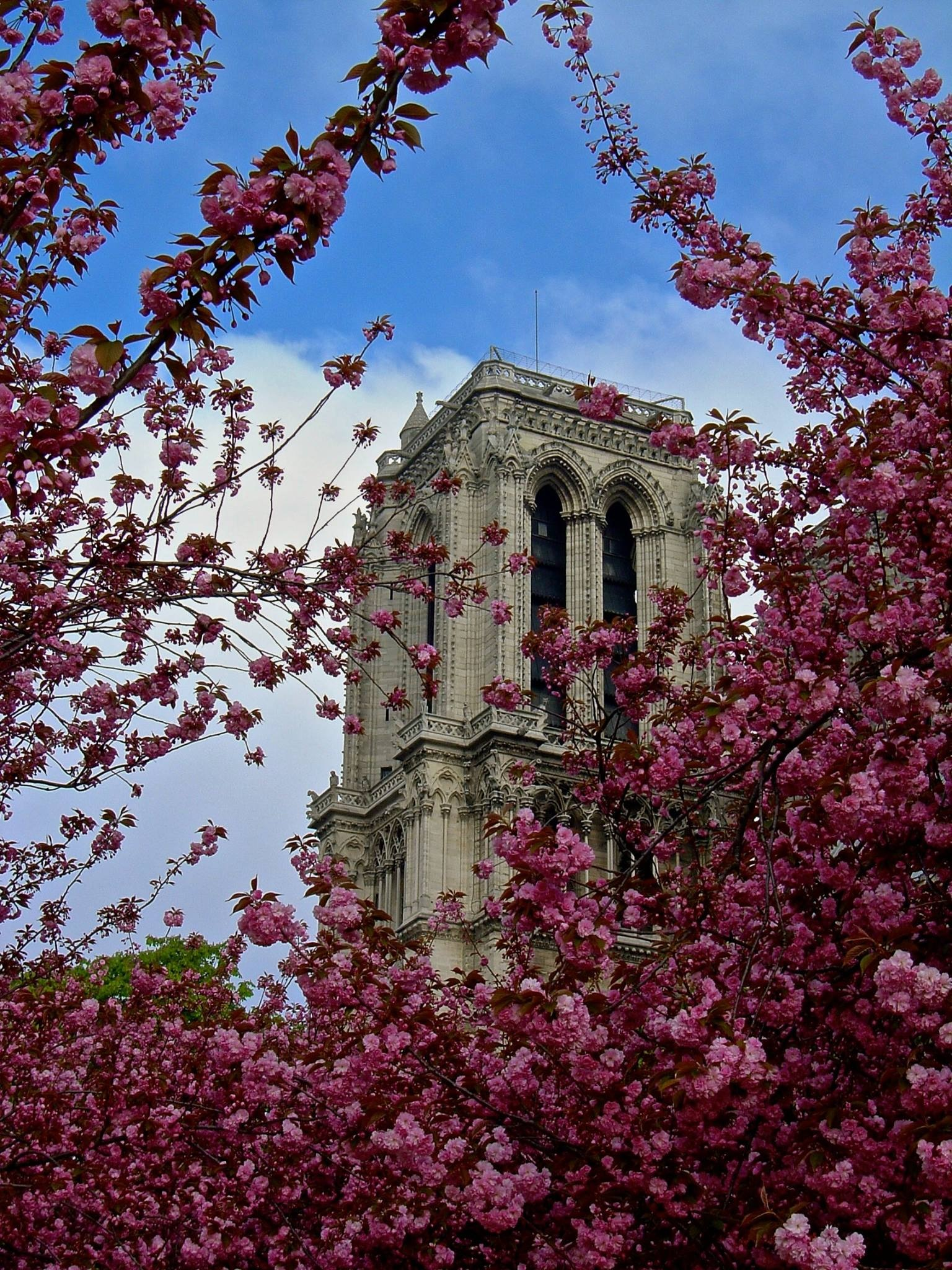 Paris Spring 2018 by Robert Malin Young