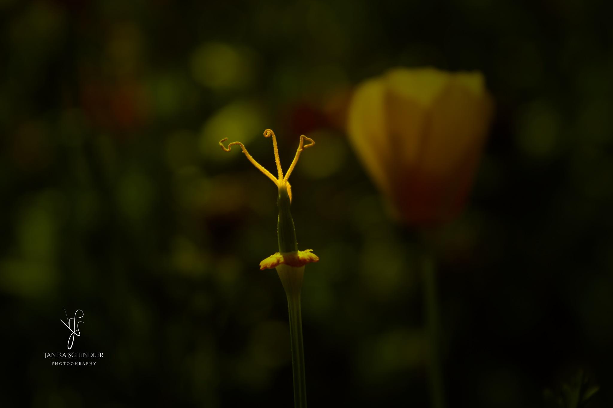 Flower skeleton by Janika Schindler