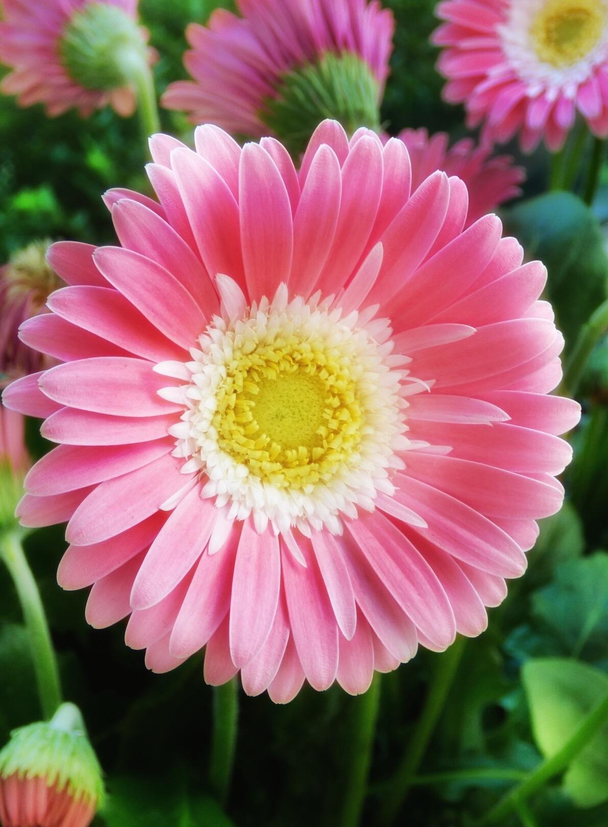 FLOWER by Věra Blechová