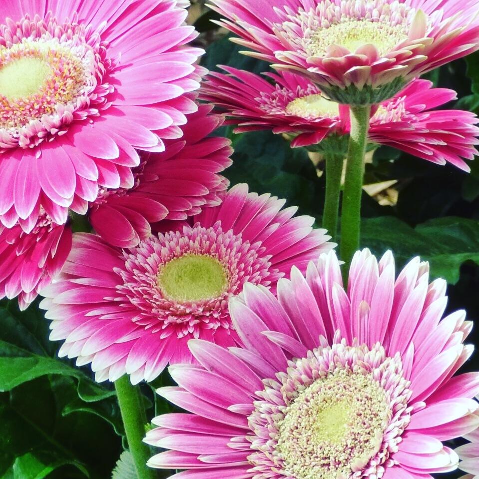 FLOWERS by Věra Blechová