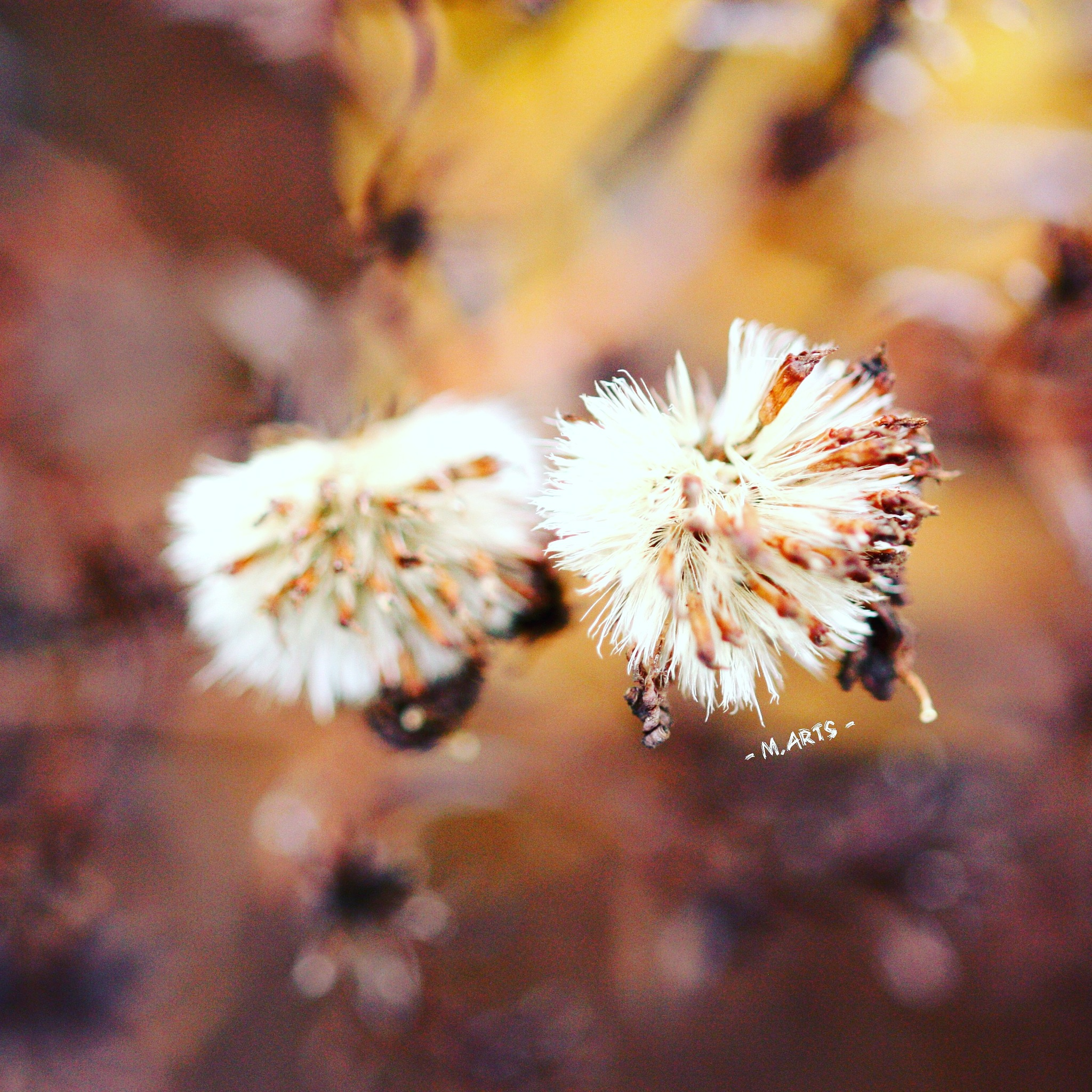 Photo in Macro #natur #nature #doga #flowers