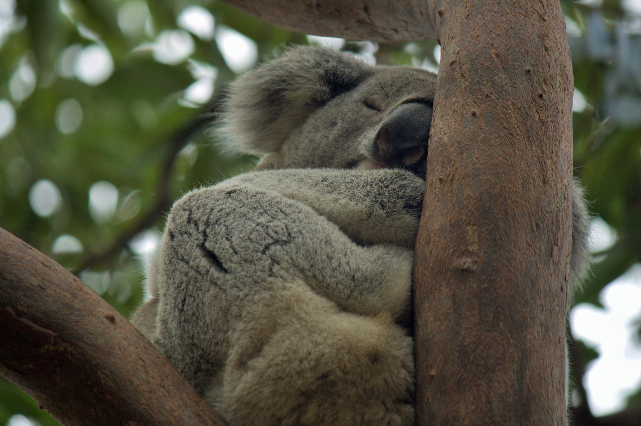 Australian wildlife by Valeria Di Meglio