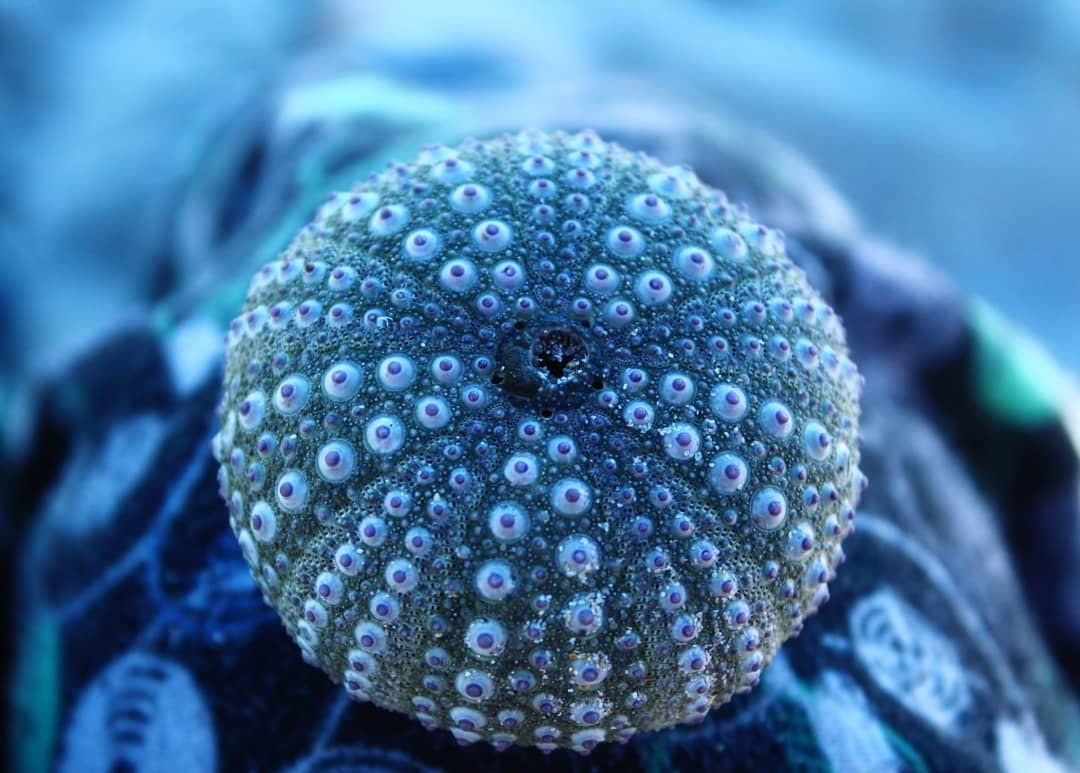 Sea urchin by Photography Rose