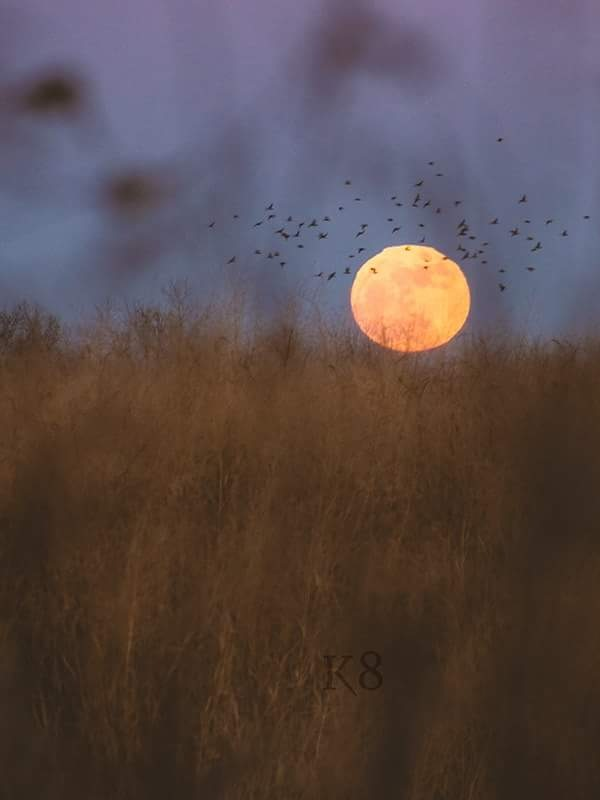 Super Moon by Kate Smith Dugger