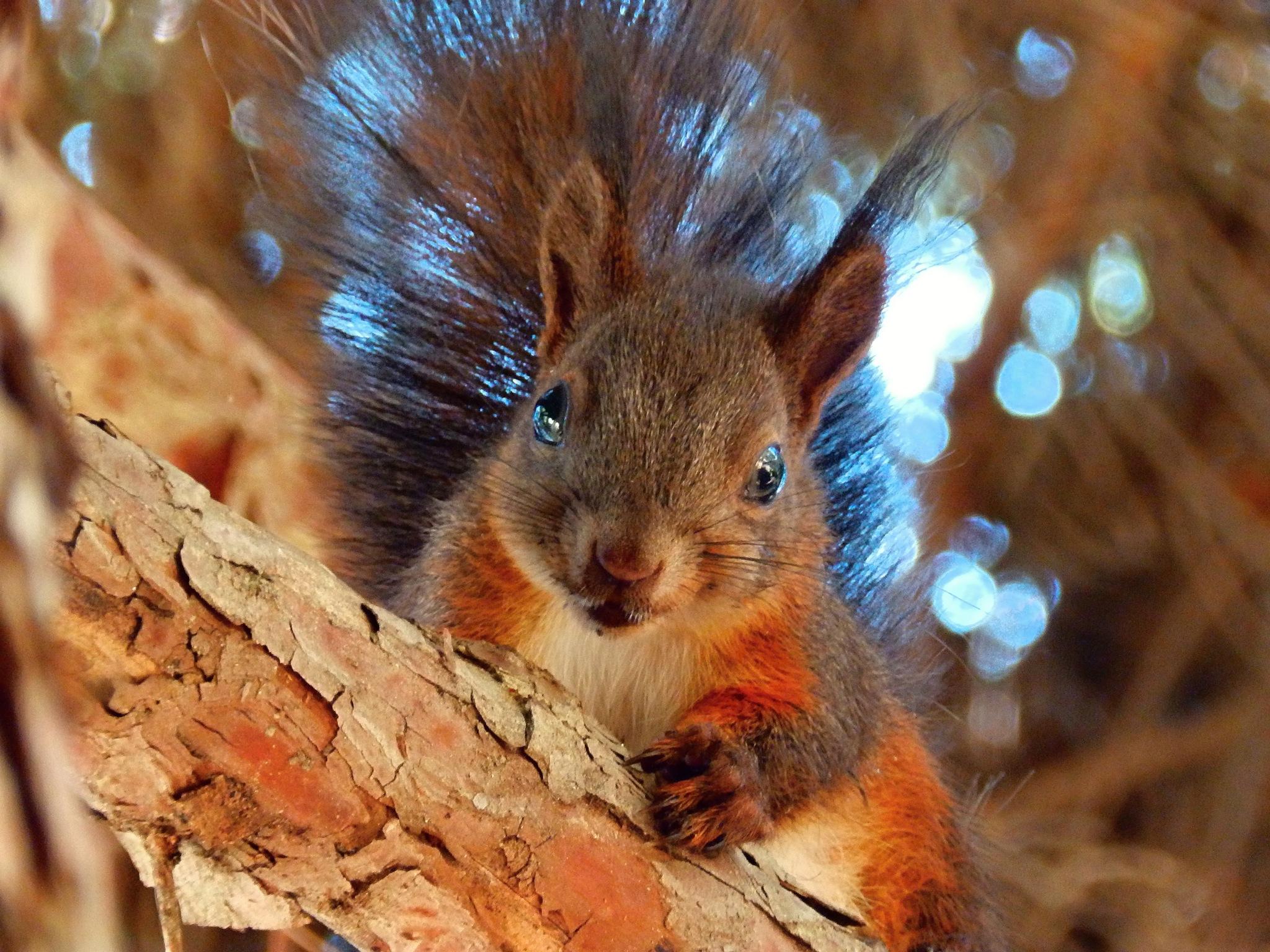 Squirrel by martin_sebesta_