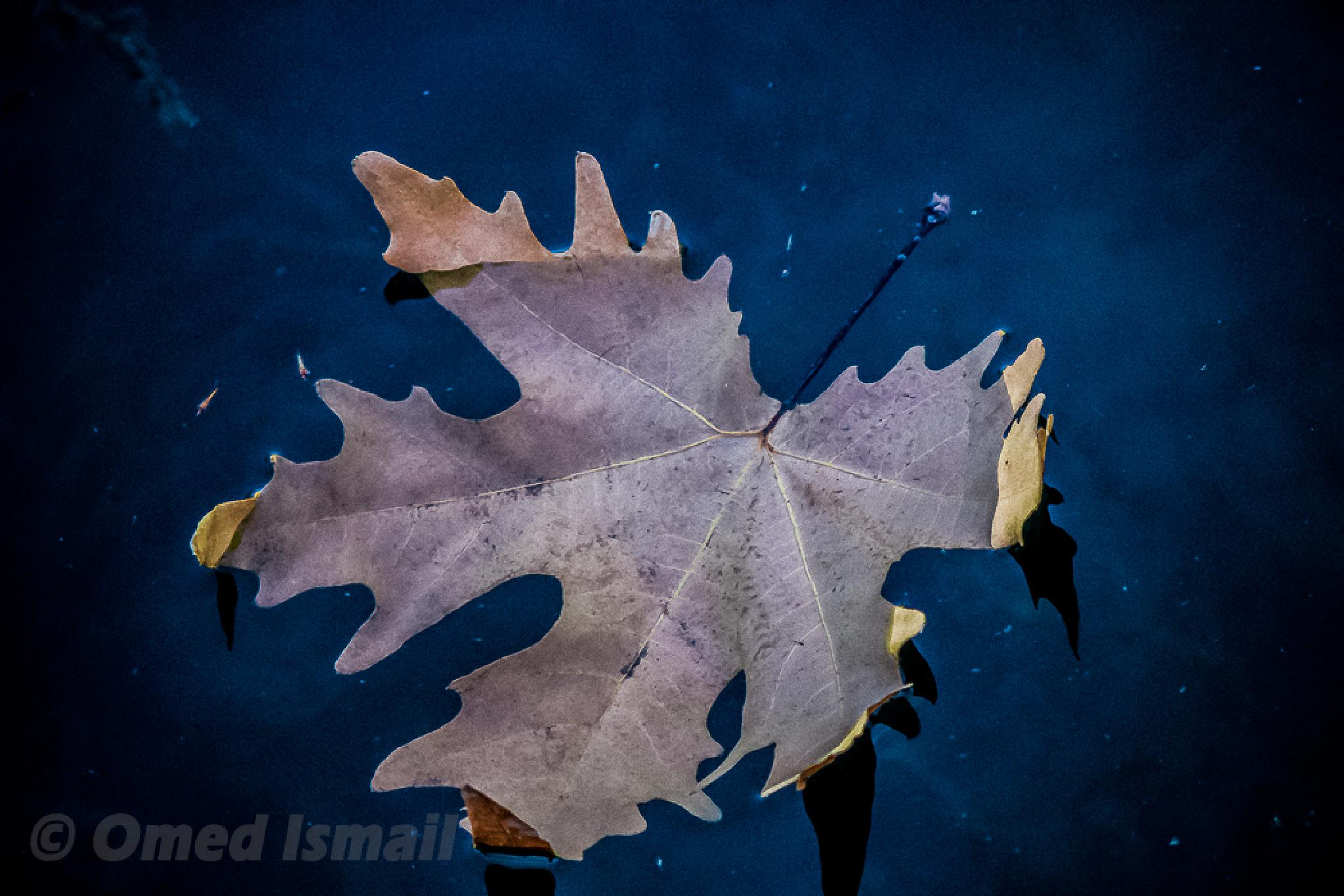Leaf & Water by Omed Ismail