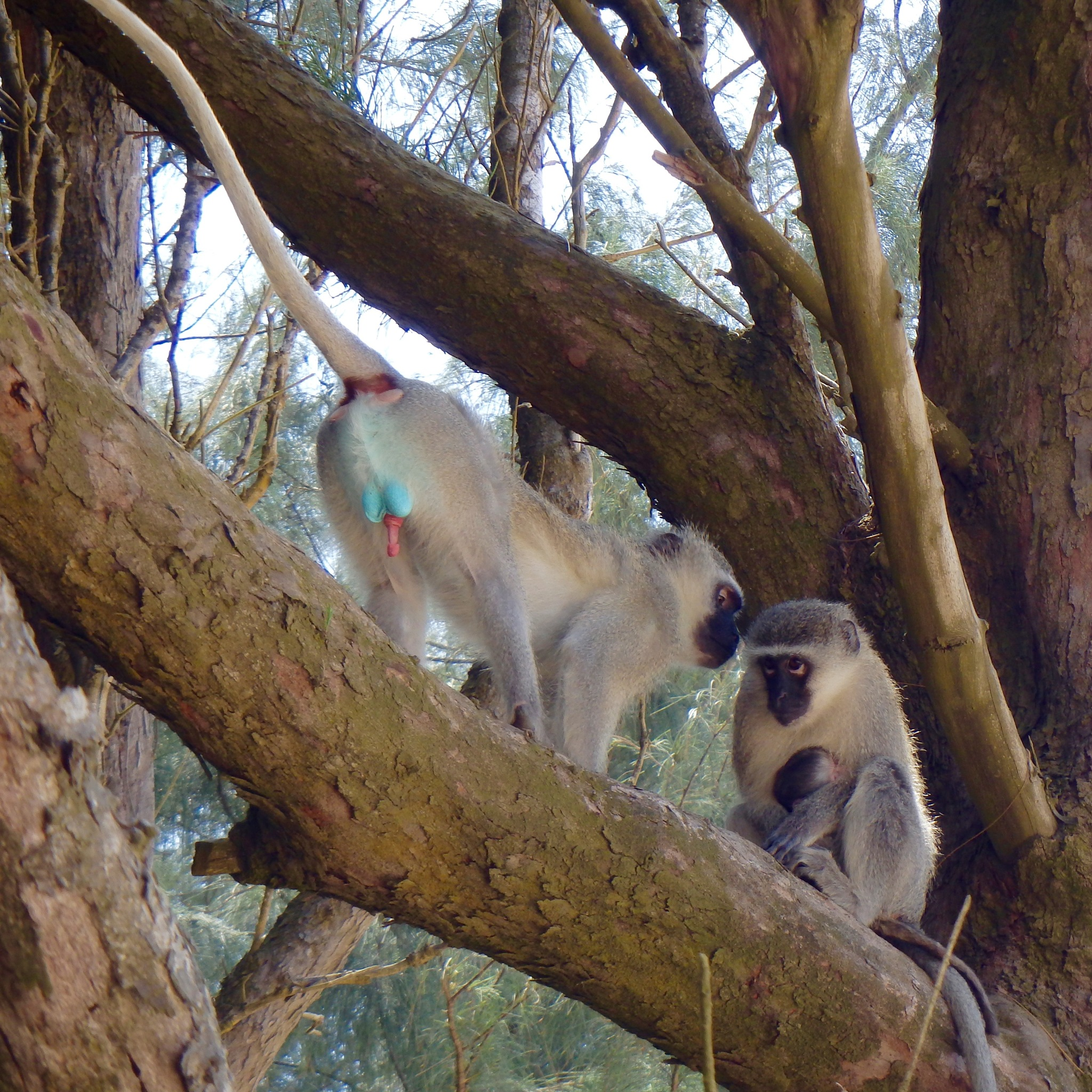 Monkey Family by Kate Paris
