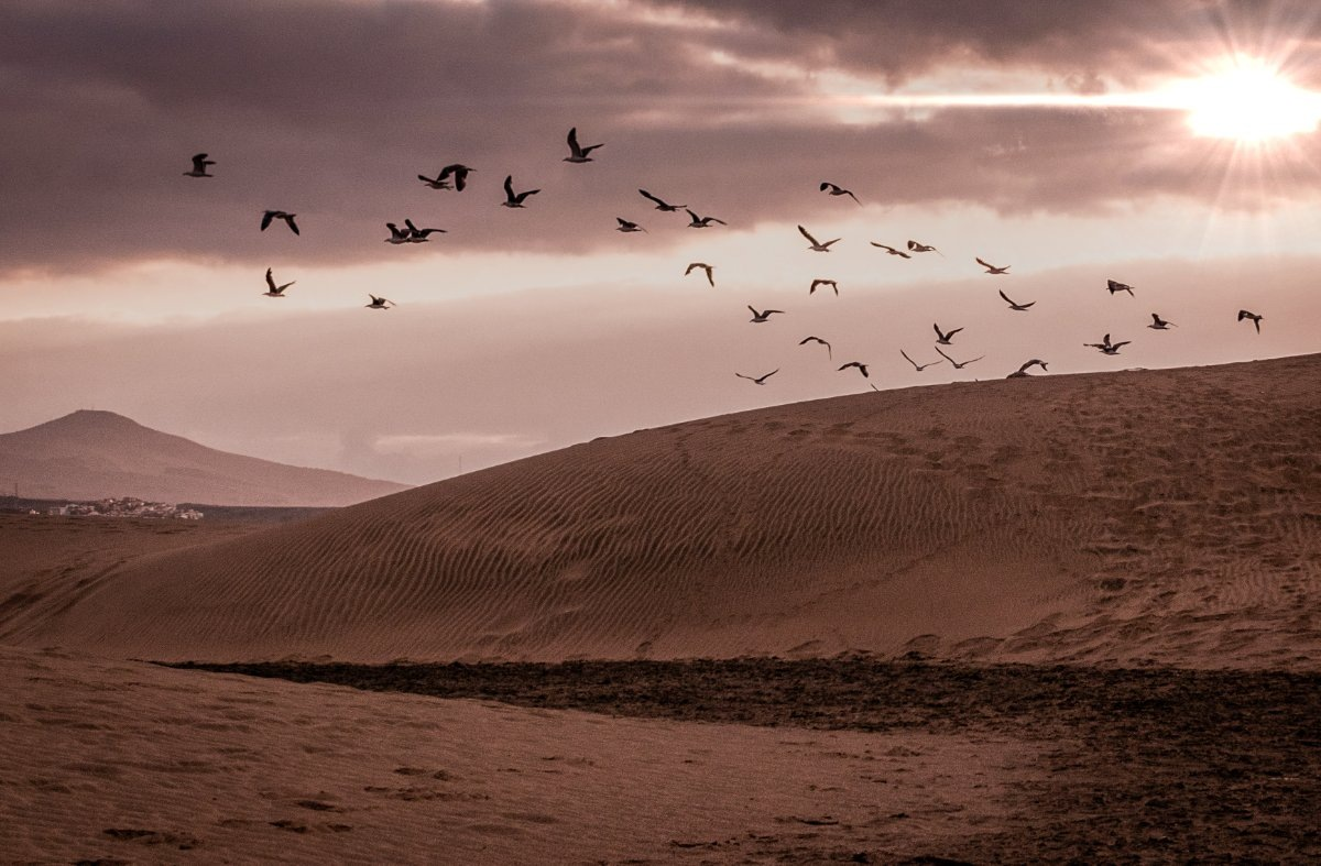 seagulls flying ,on a beautiful morning sunrise  by Daniel Pavel