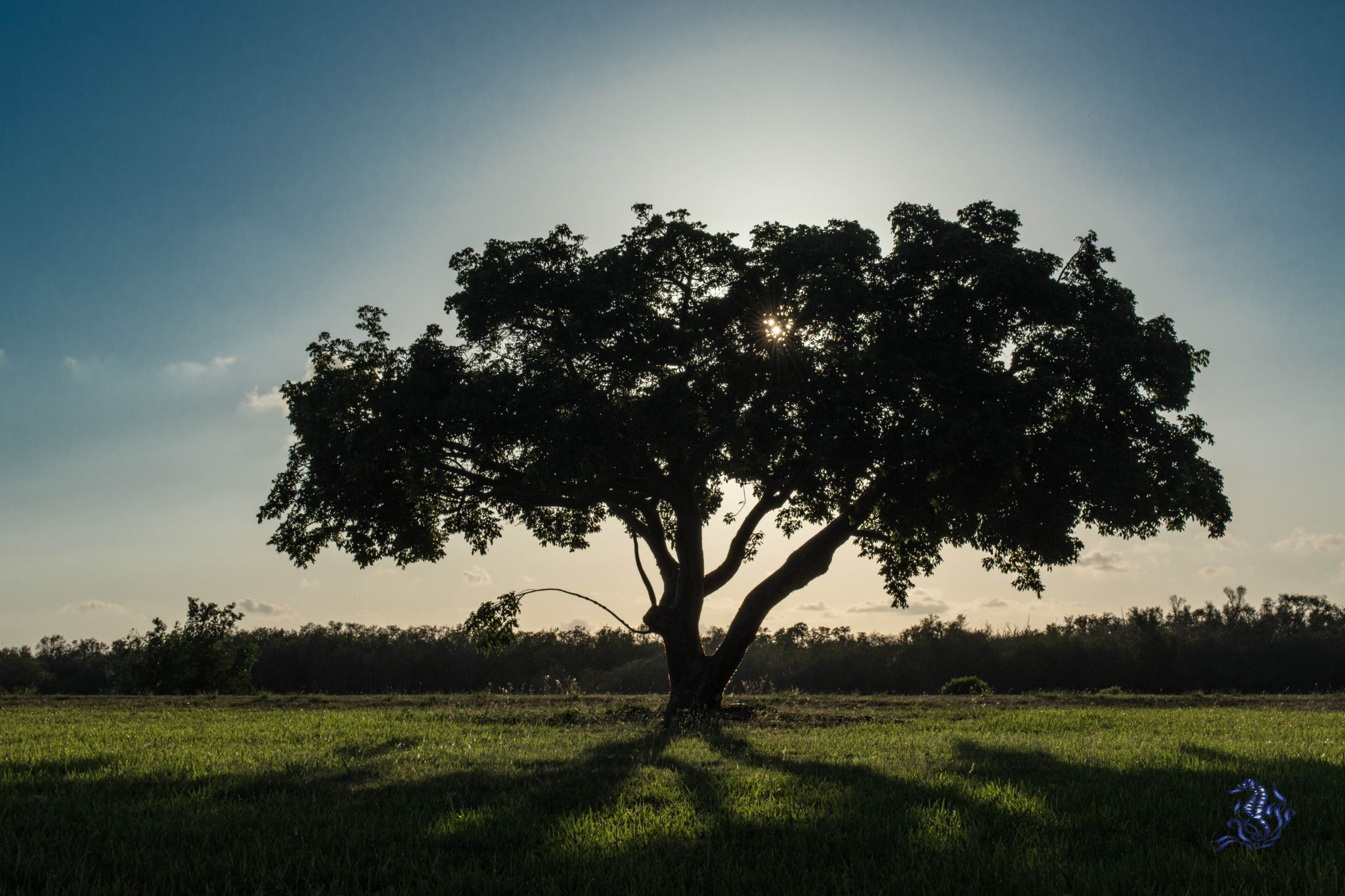 Under the Shade Tree by Photos by Flo