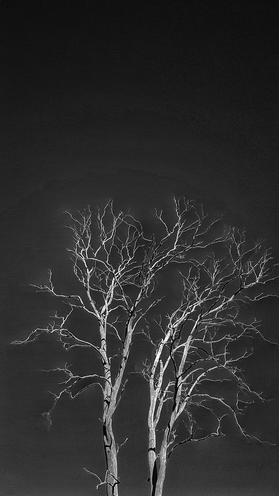 Dead Tree  by Tom