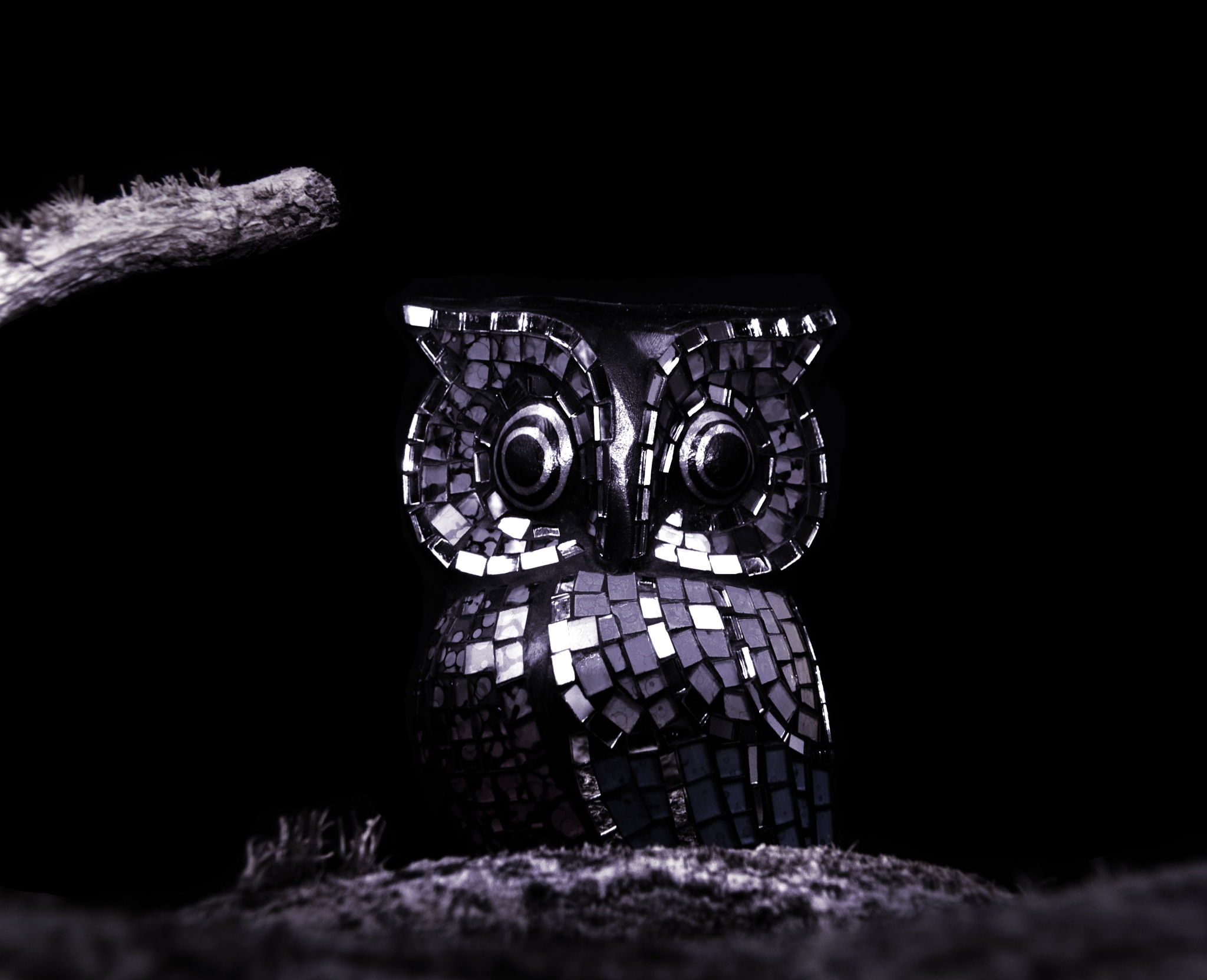 owl by Terry Meehan
