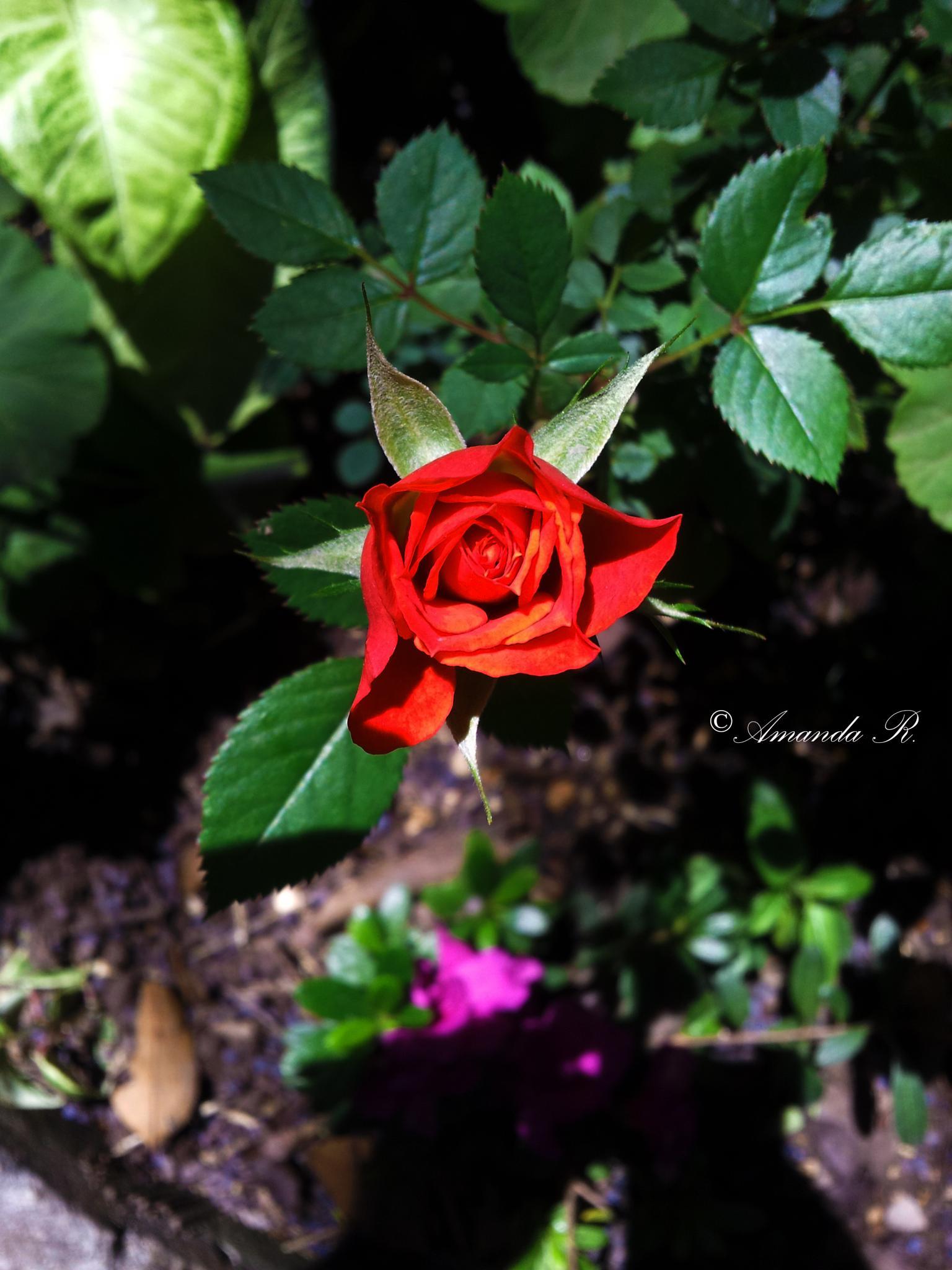 Vibrantly beautiful nature by Amanda Rodrigues