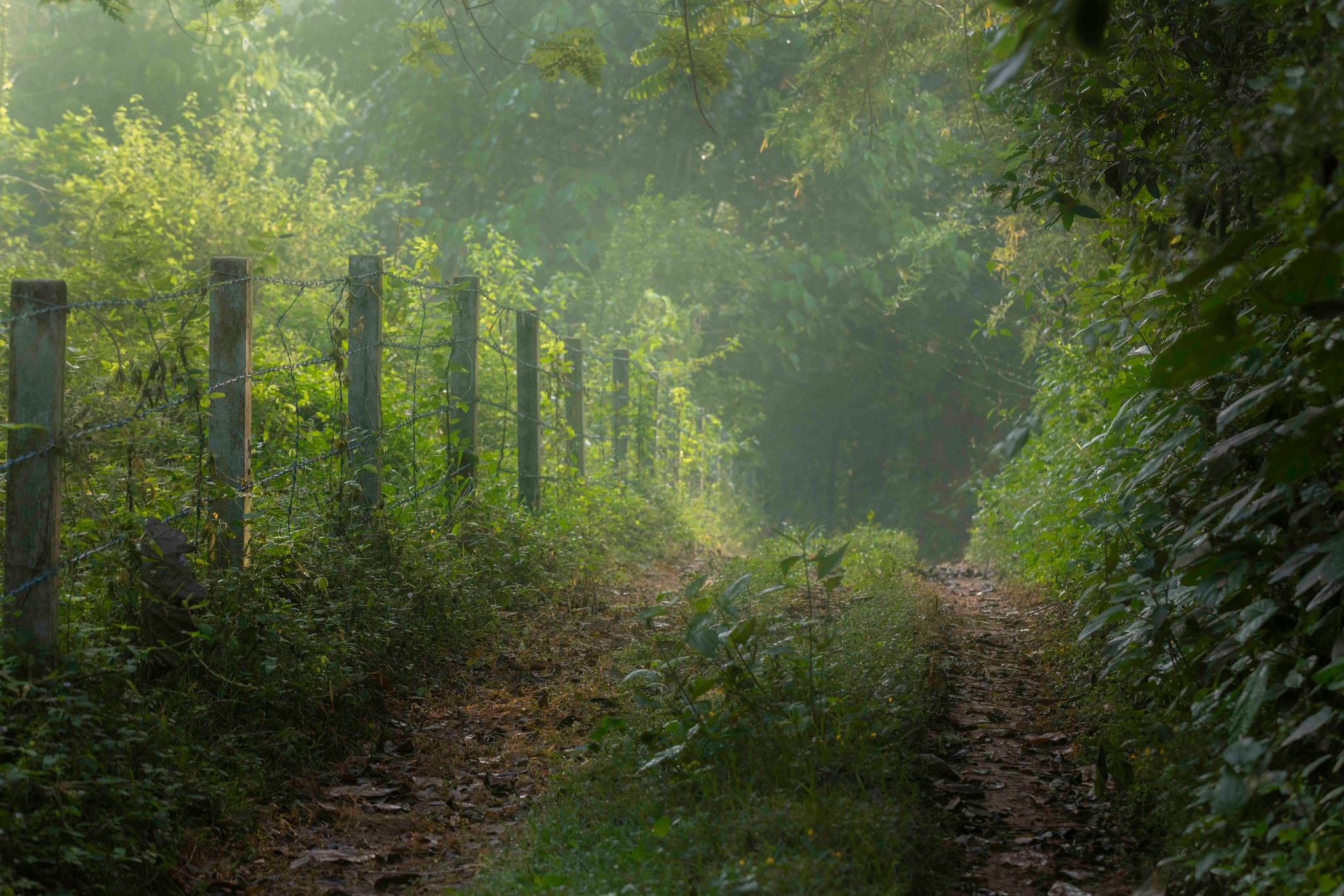 Country Roads by Vikas Datta