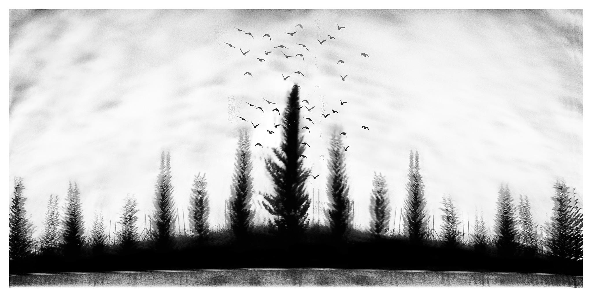 let's leave !  by Aboubakr Hadjadj
