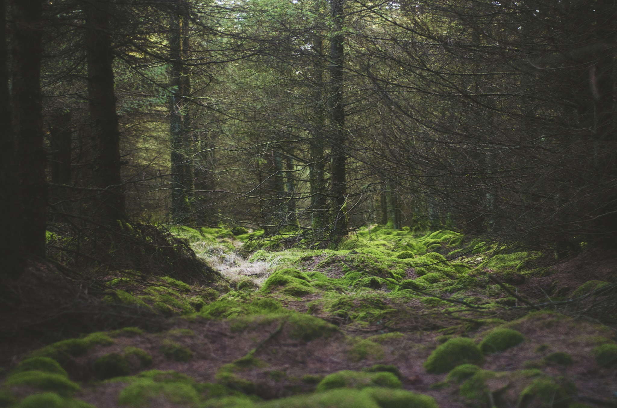 Lumpy Forest by Black Hat Photography