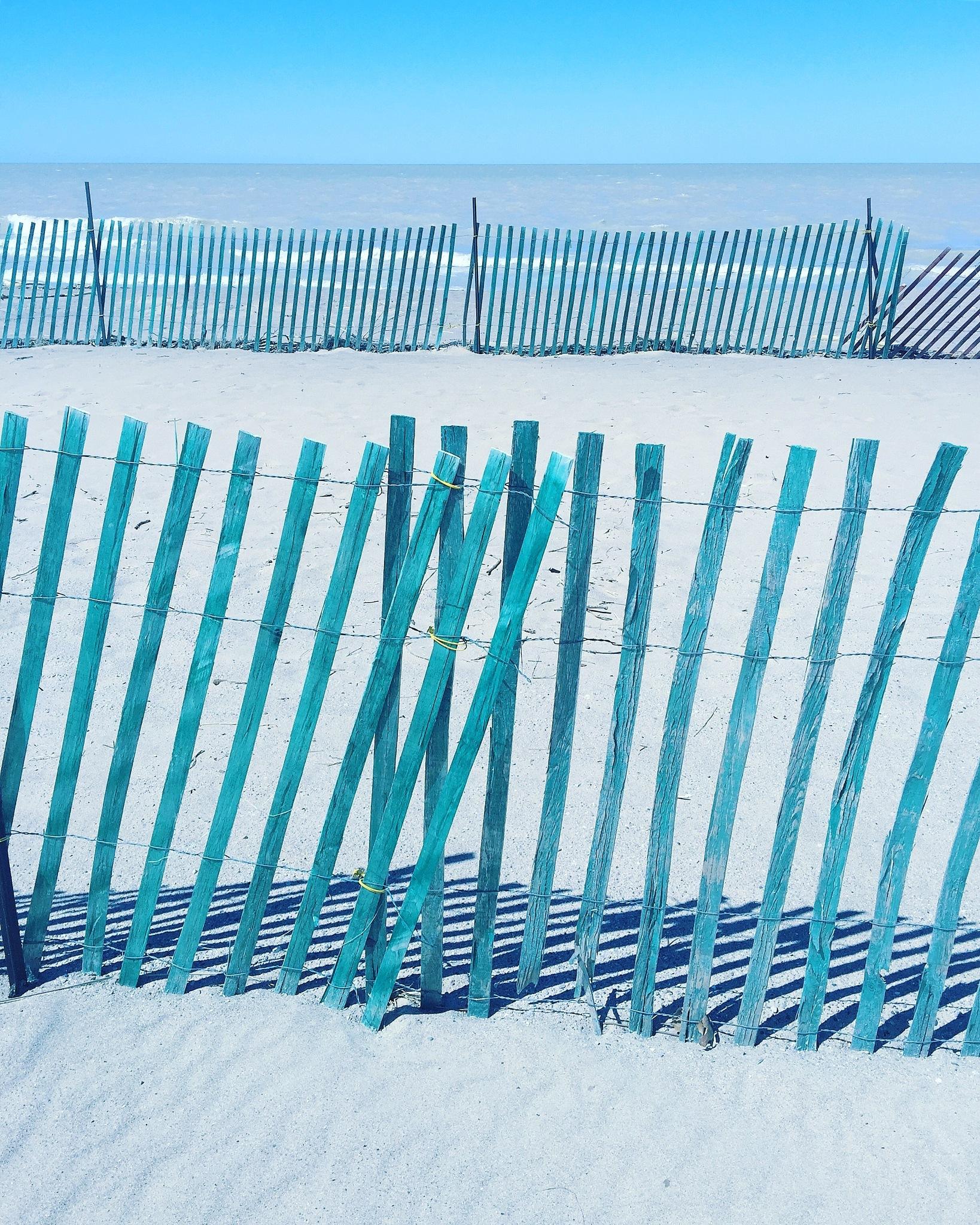 Winter Remnants by Rene V. Steiner