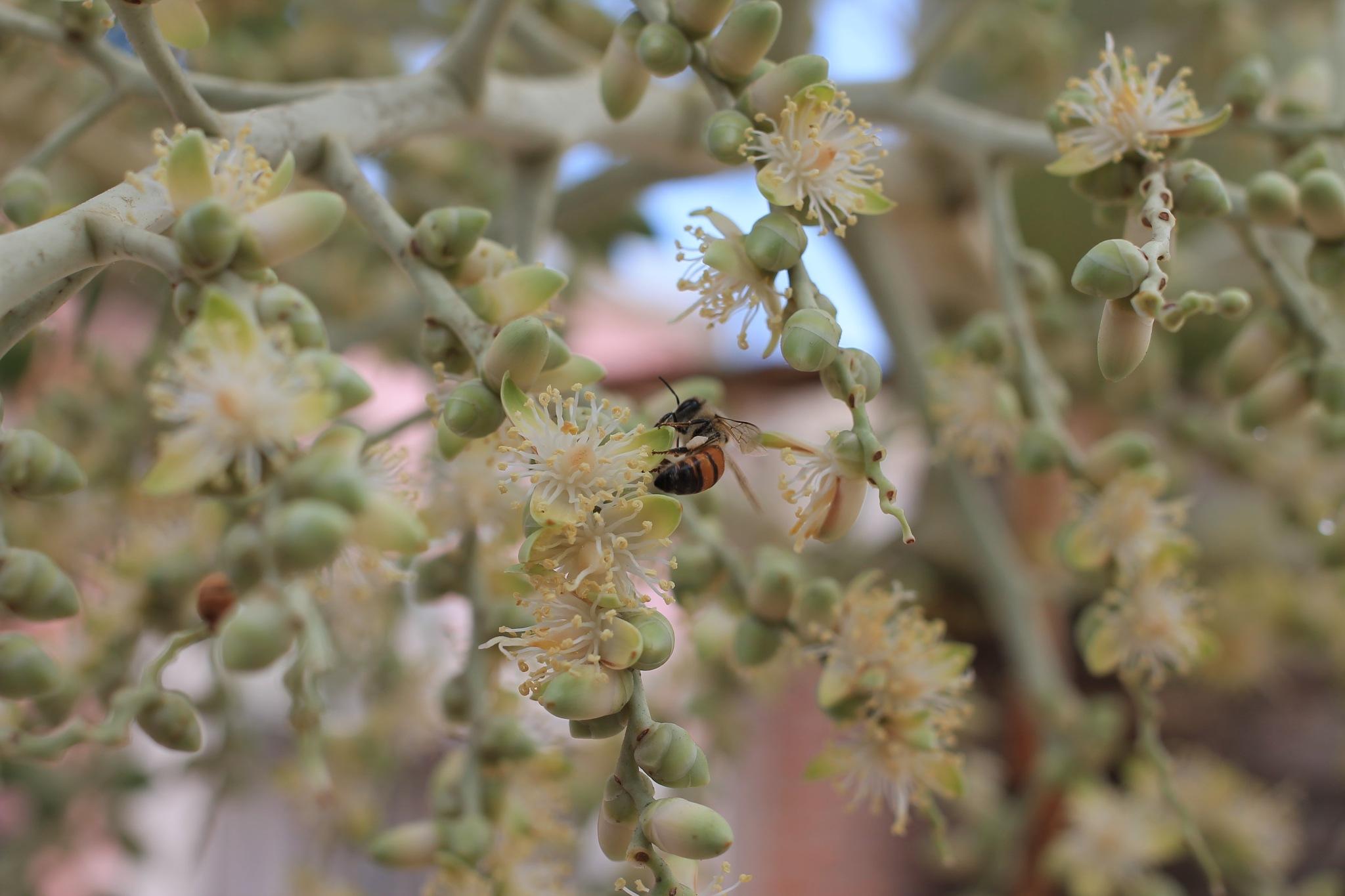 Bee careful by Paul Alvarez