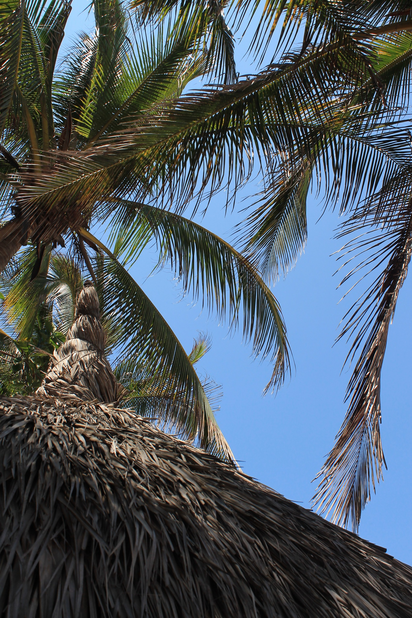 PALM LEAVES TREE by Paul Alvarez