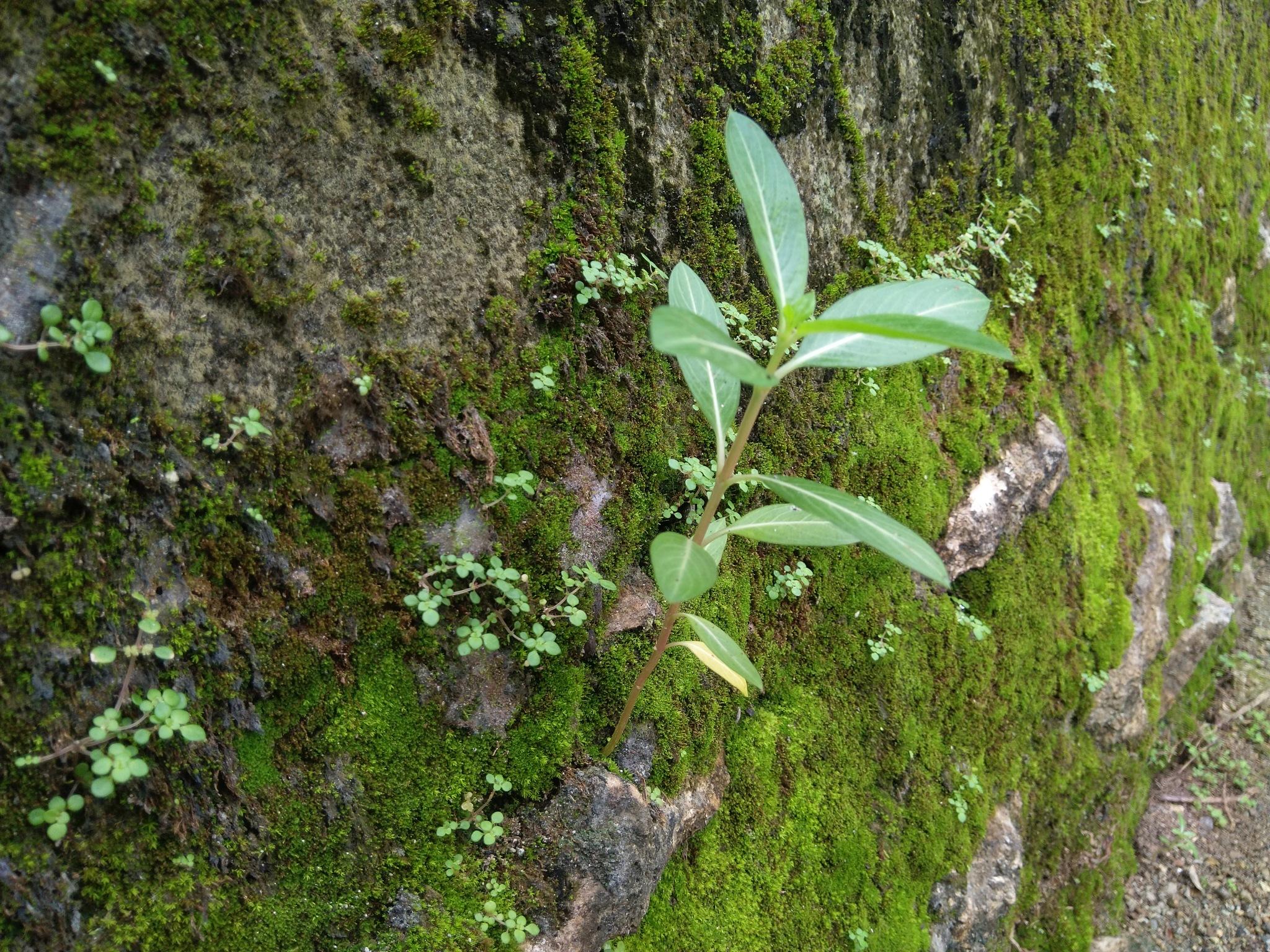 Photo in Nature #tanaman #garden #bunga #hijau