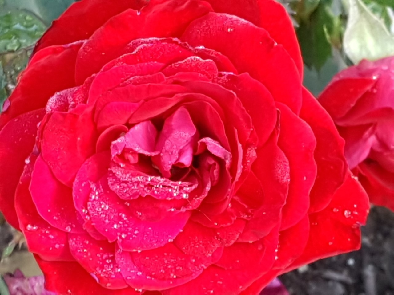 Screaming Flower by Marilyn Linton