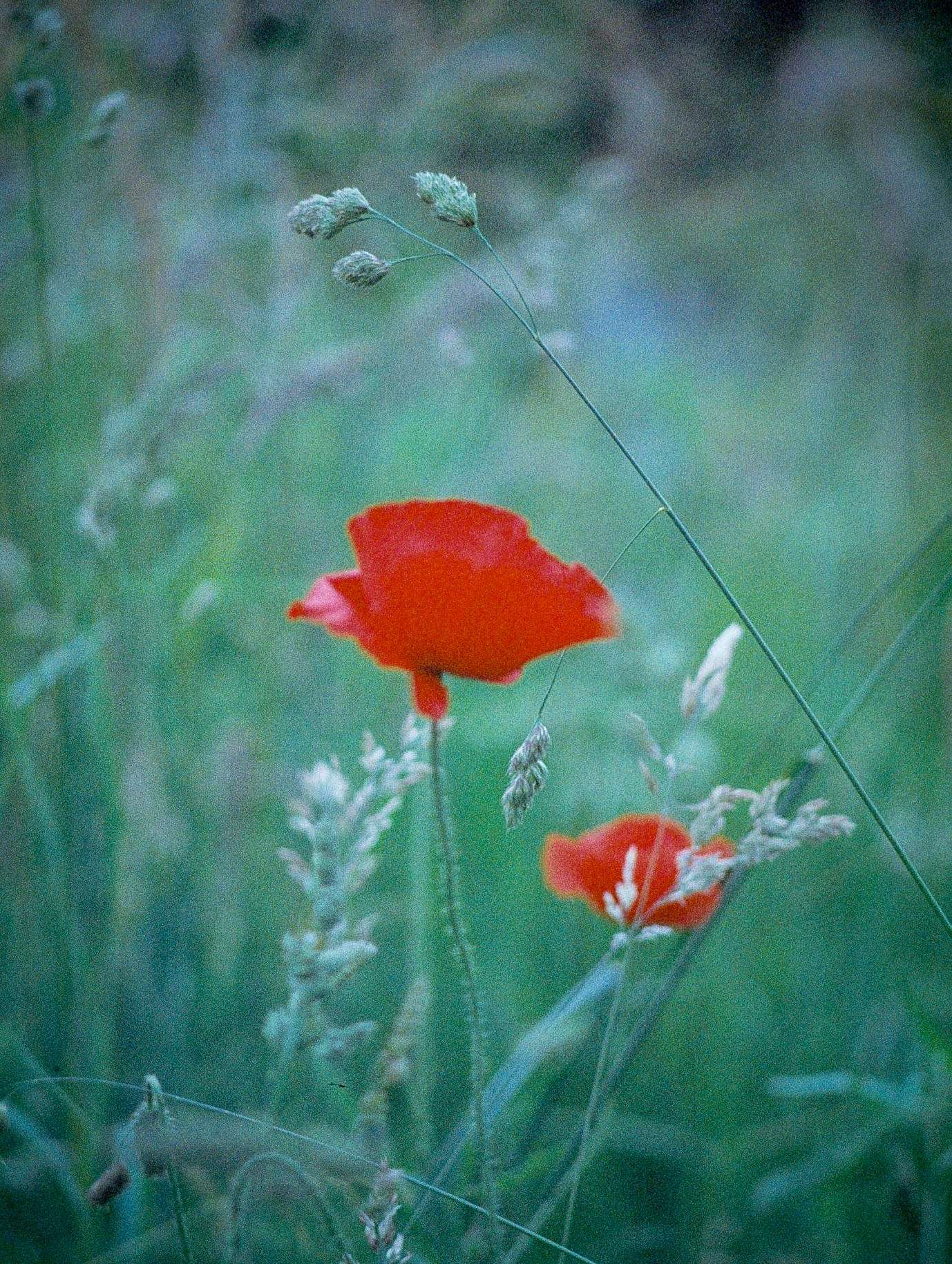 Untitled by Paul Theunis Fotograaf