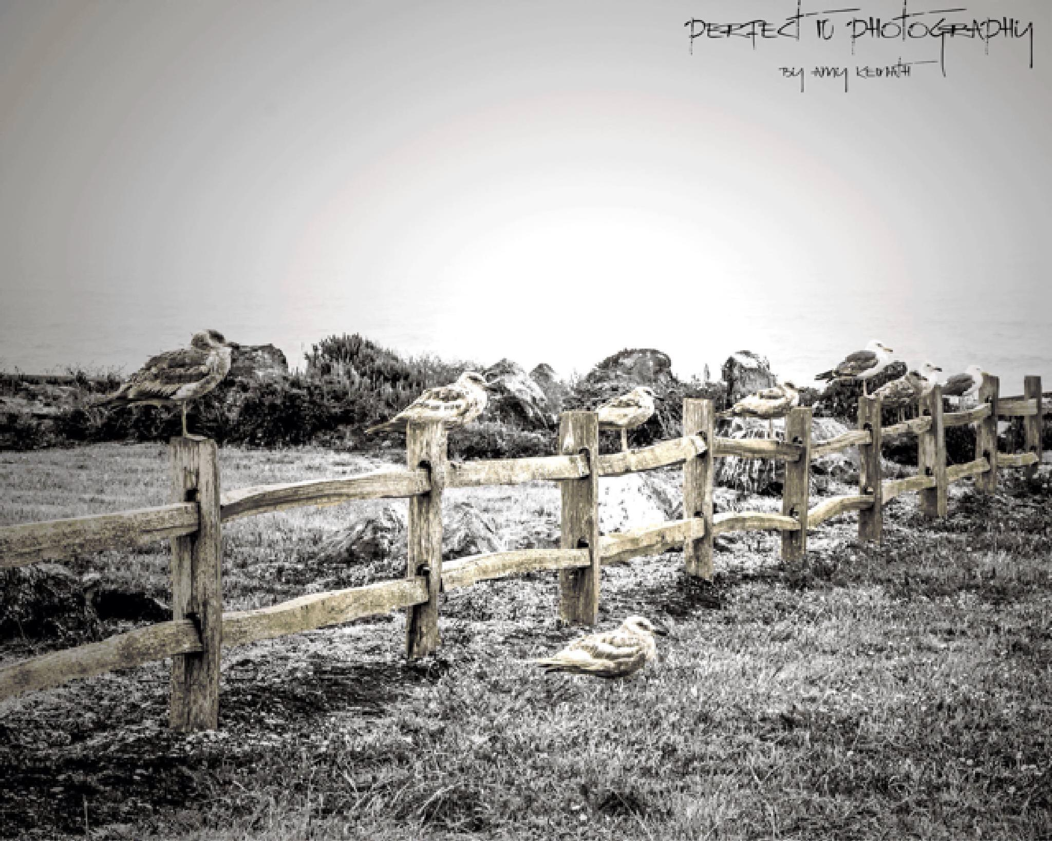 IMG_7360 by Amy Keinath