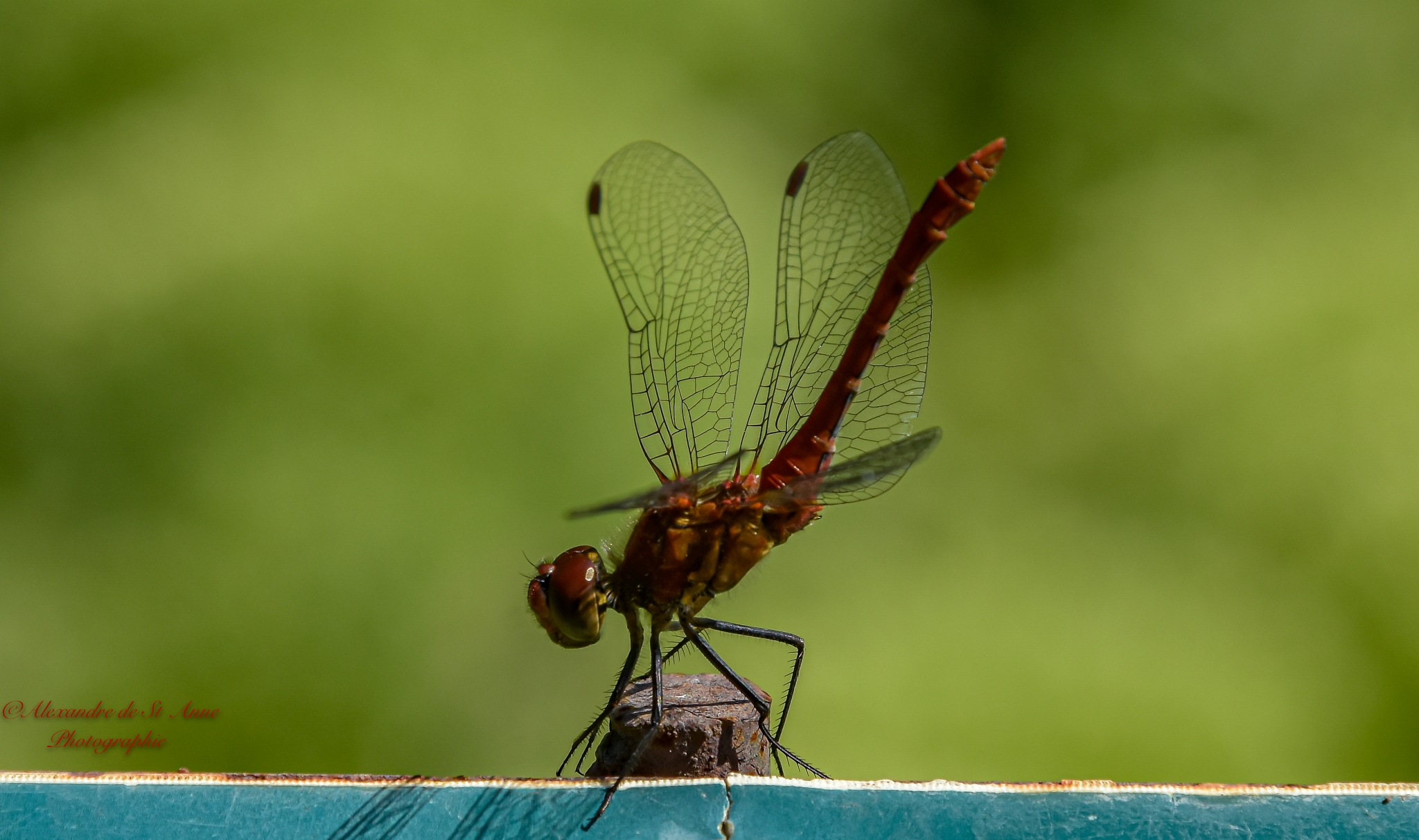 Dragonfly ... by Alex Etien