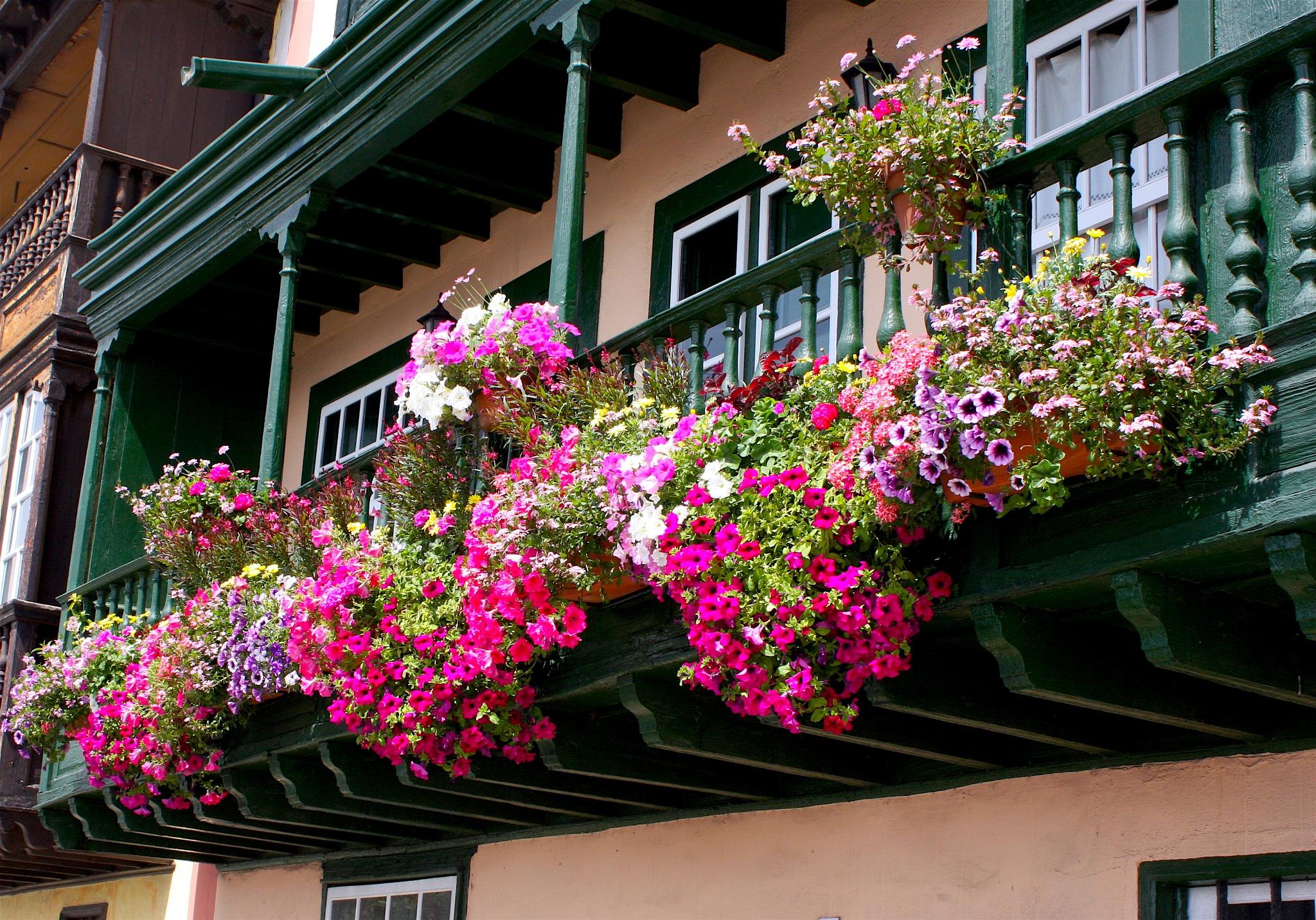 Floral balcony by Ddolfelin