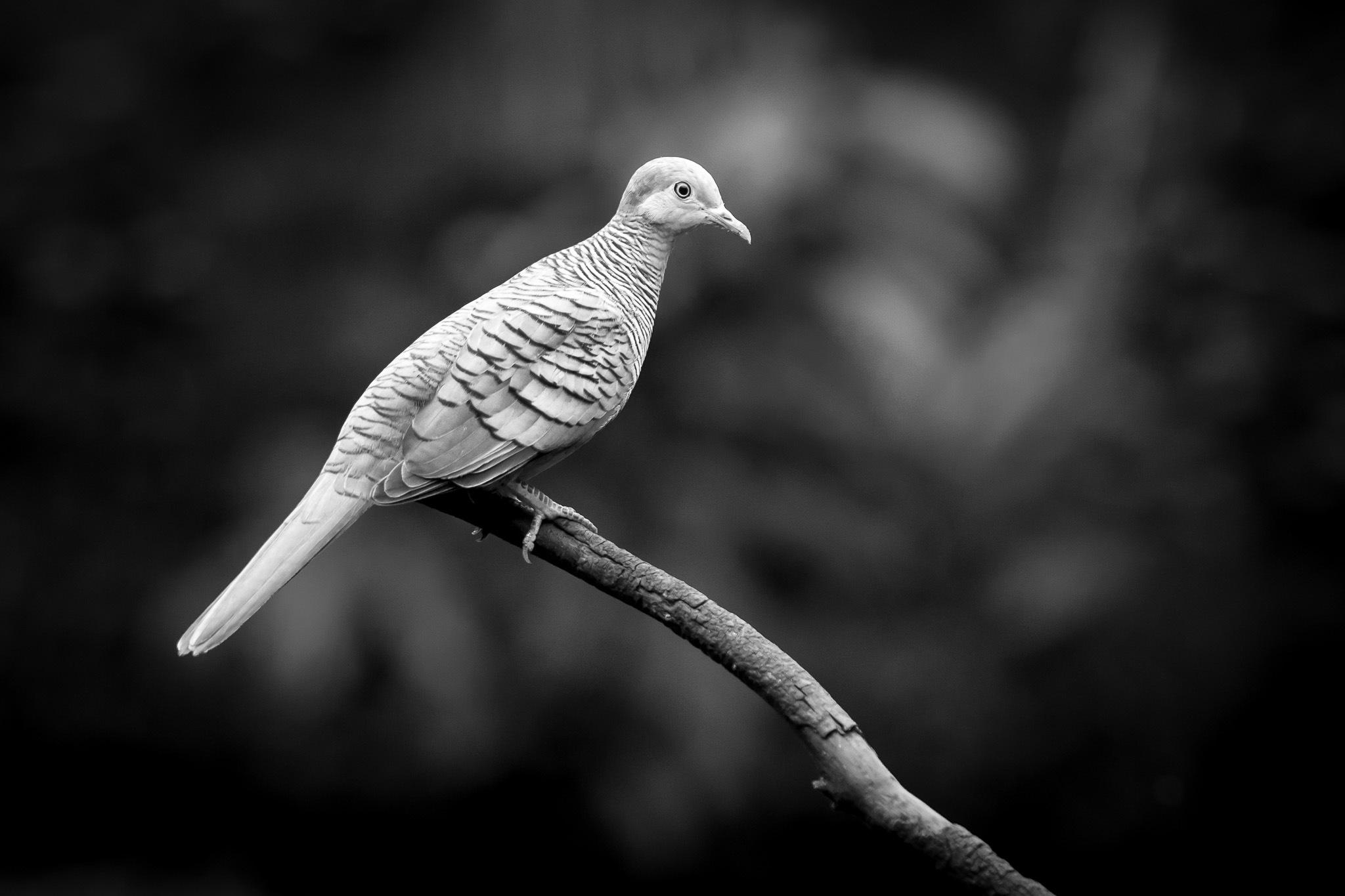 Bird in B&W by Ouioui Ouiouiphoto