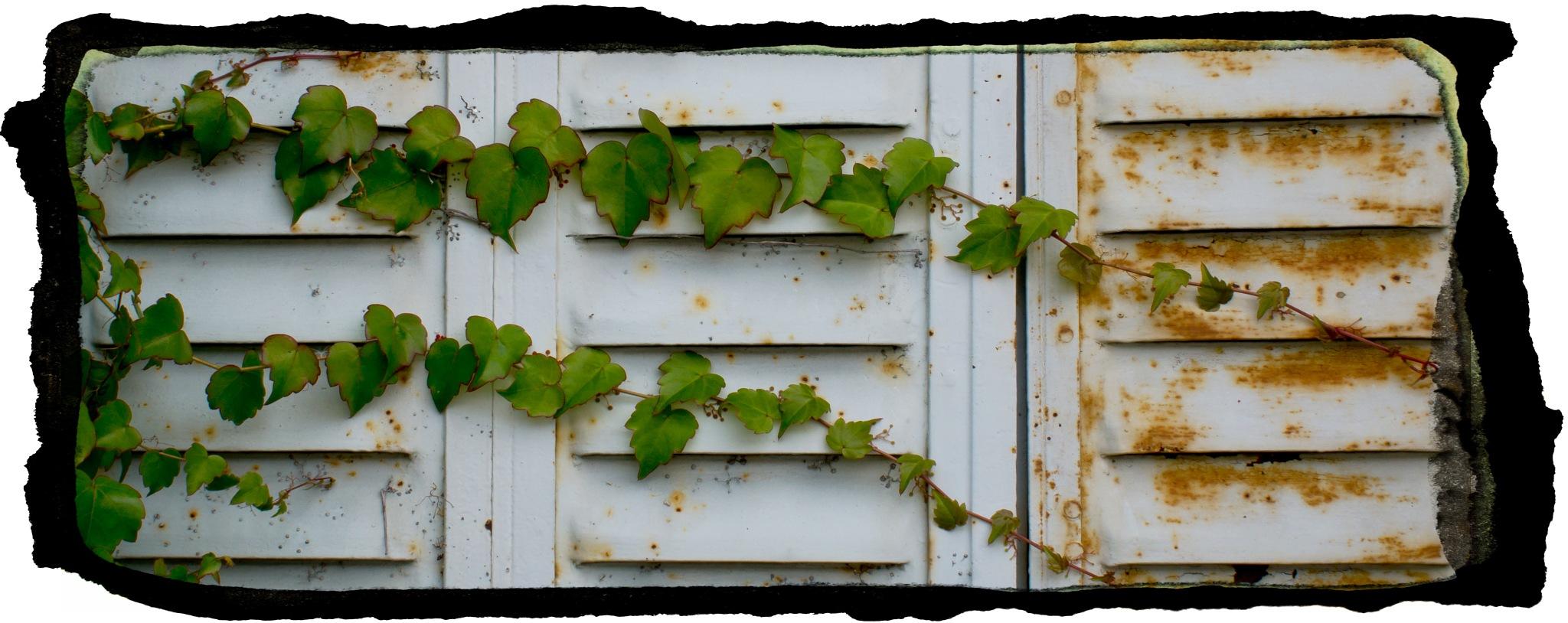 Green Vine by Marilyn Bielski