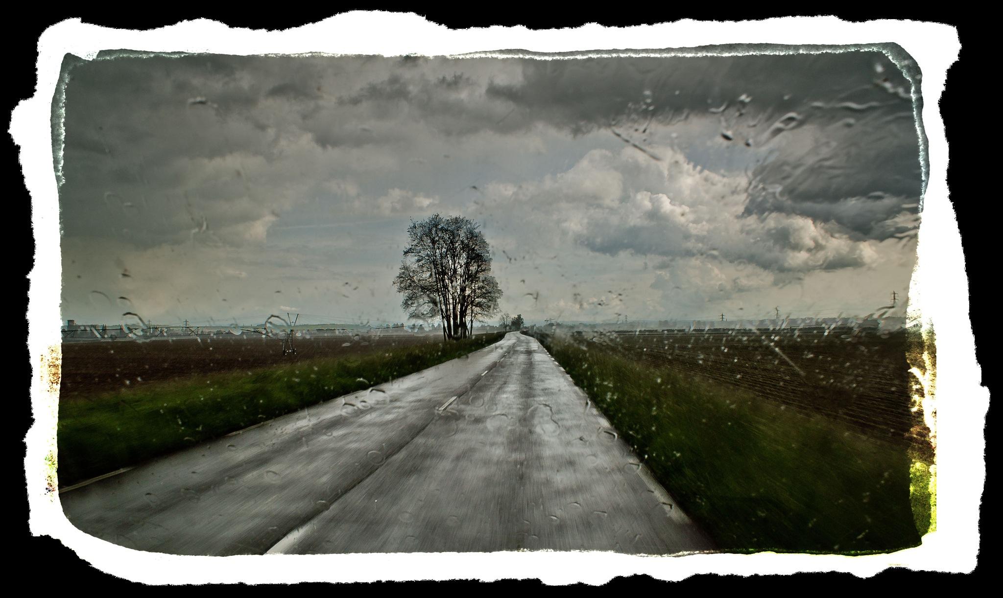 The Journey by Marilyn Bielski