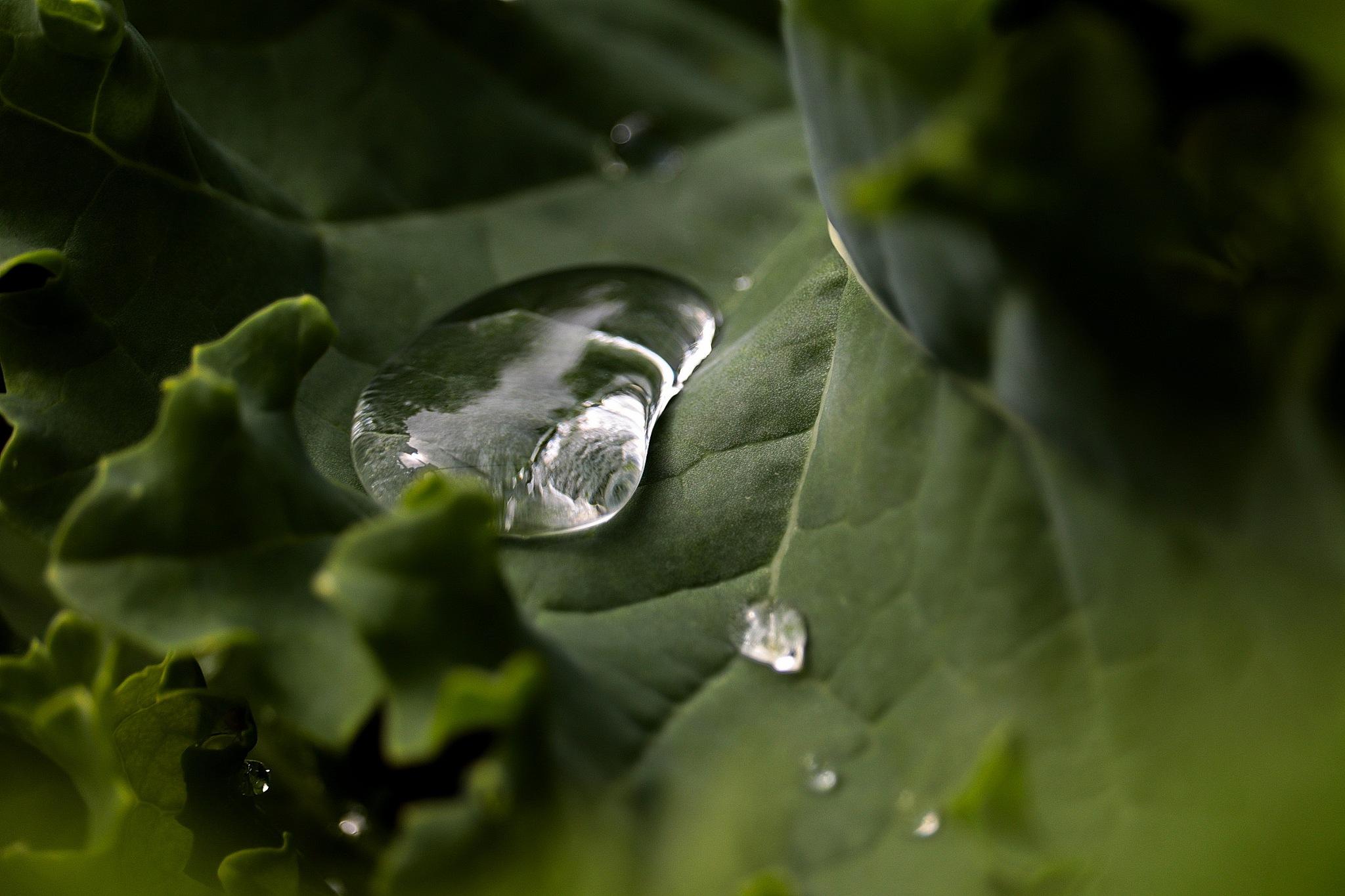 Garden Reflection by Derek Kehl