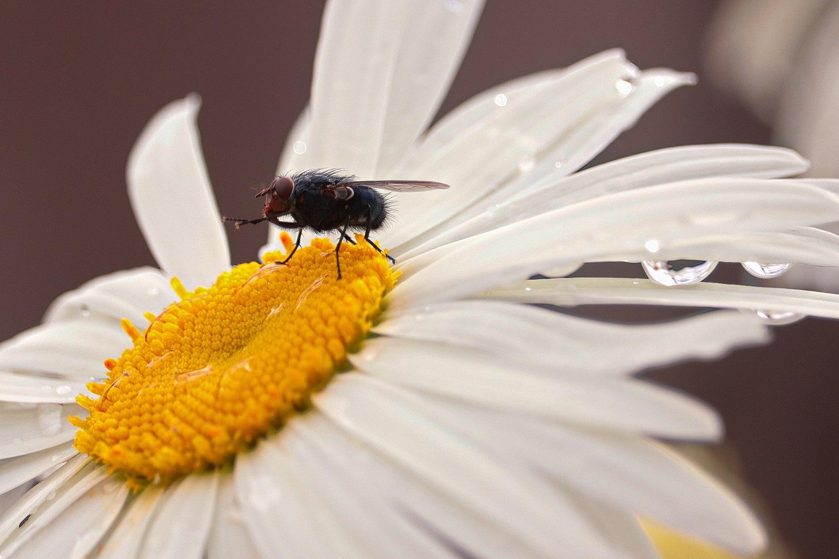 Bug Bath by Derek Kehl