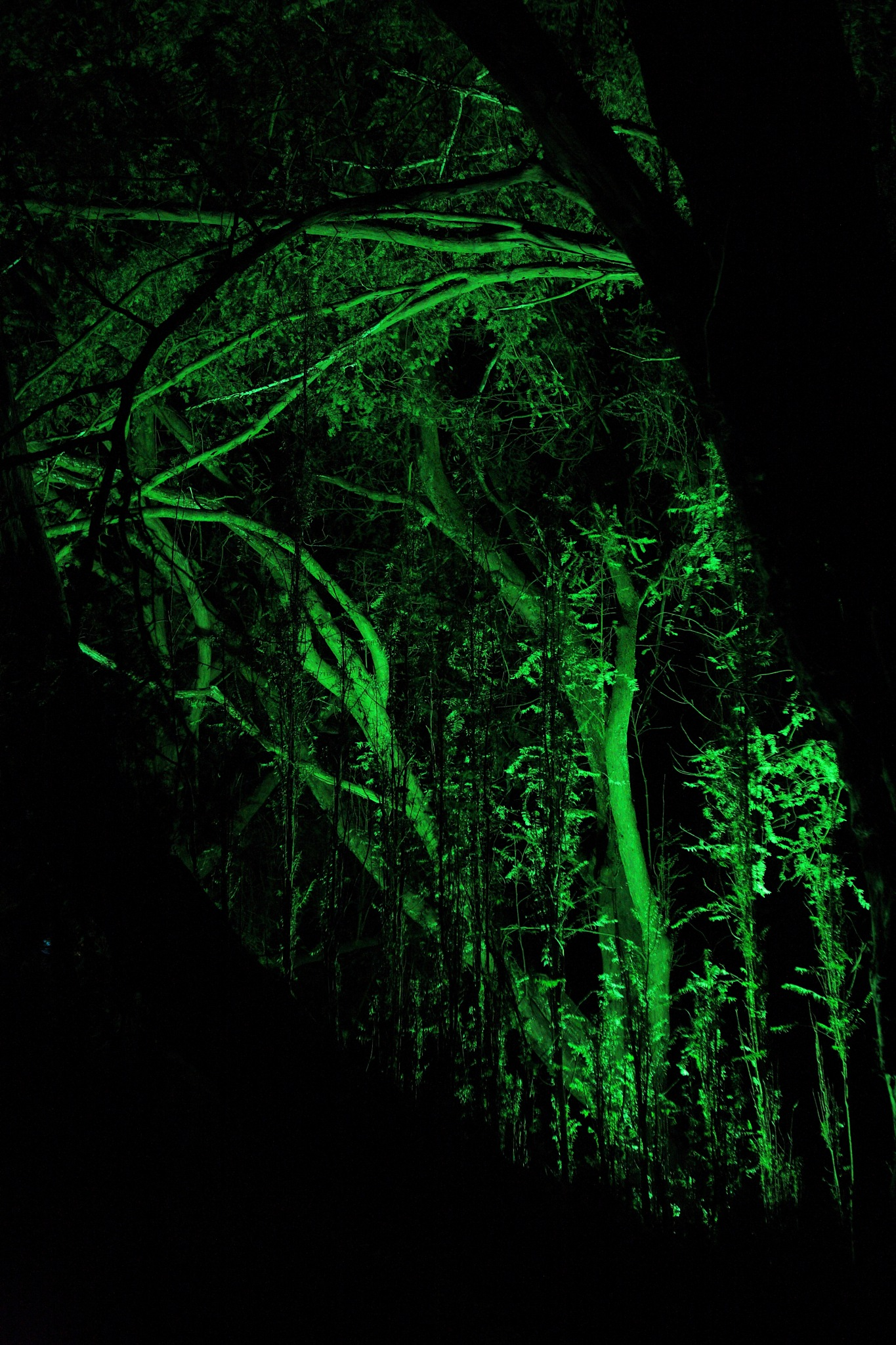 In the Woods at Night by Vicki Gardner