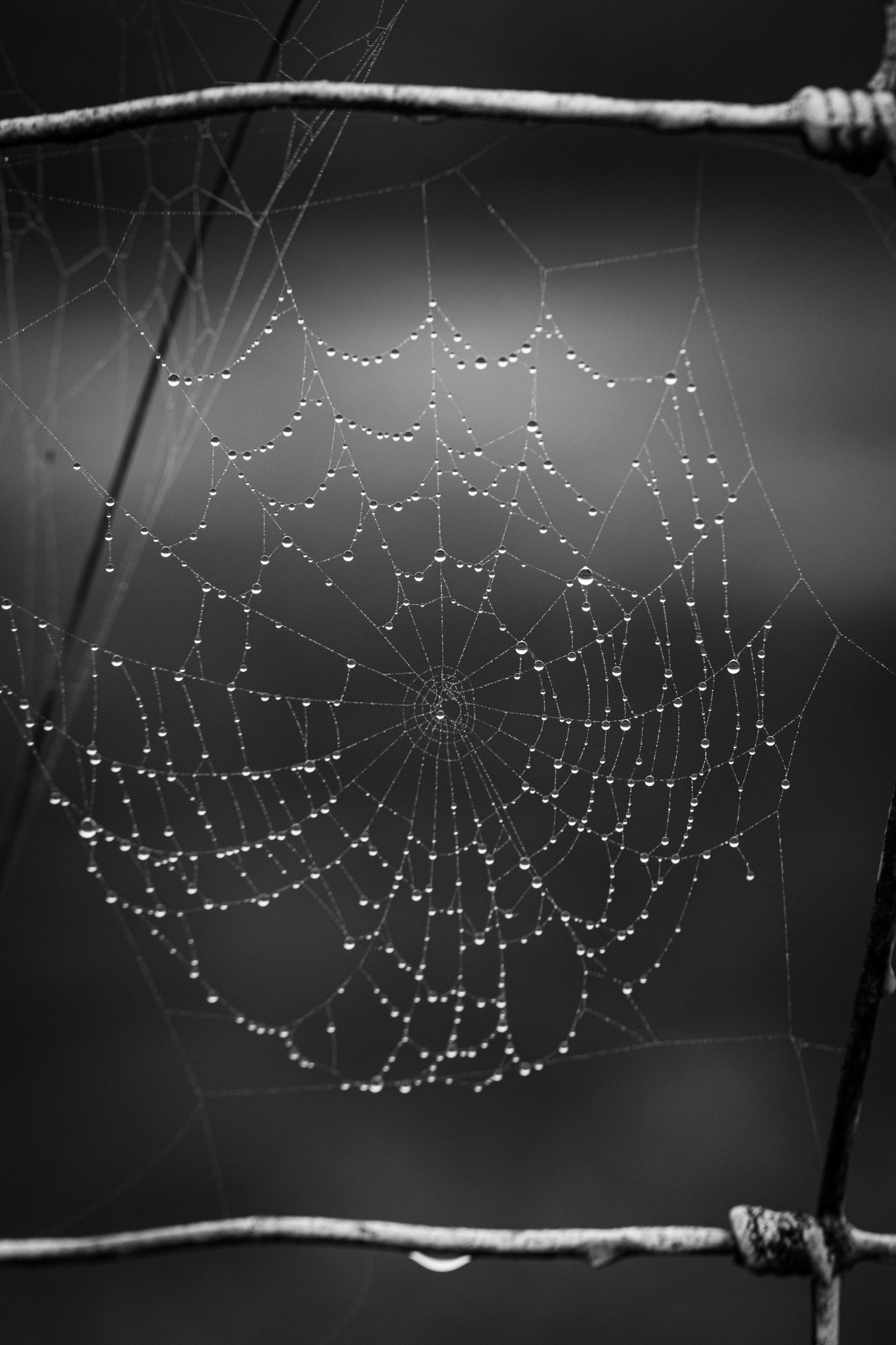 The web in the morning dew by Legenderriere
