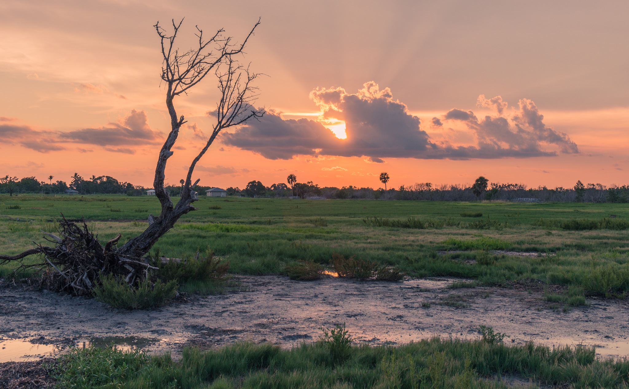 Photo in Landscape #america #clouds #dawn #environment #everglades #fauna #flora #florida #grass #green #homestead #horizon #horizontal #lake #landscape #marsh #national #natural #nature #nobody #outdoor #outdoors #outside #pad #park #path #pine #pines #pond #reflections #river #sky #south #sun #sunrise #sunset #swamp #tourism #trail #travel #trees #twilight #united #usa #view #water #wet #wetlands #wild #wildlife