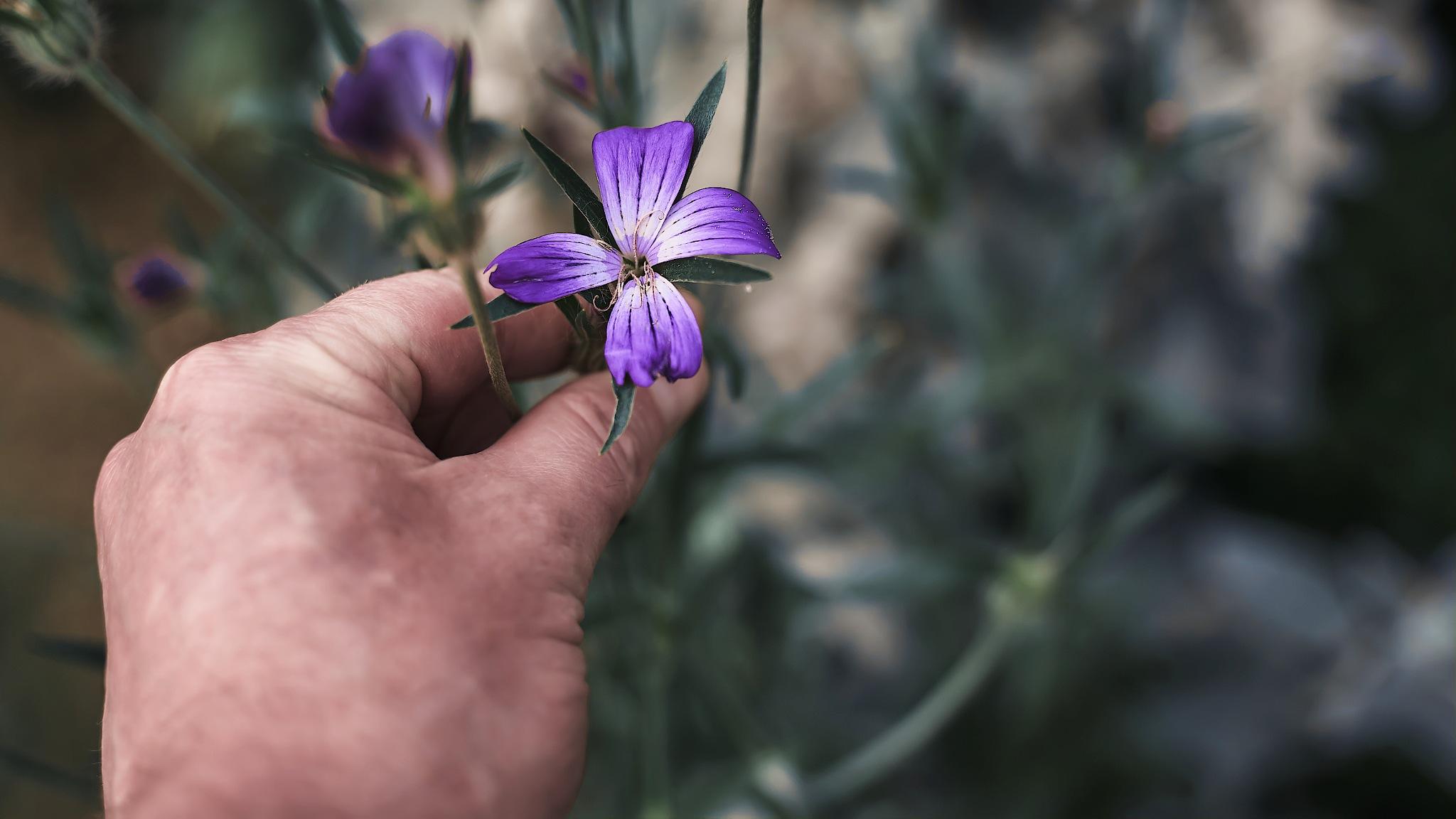 Hand Flower by Scott Williams